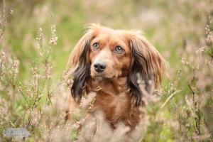 Hondenfotograaf-Soest-Dier-en-Baasje-fotoshoot-bij-de-Soesterduinen-11