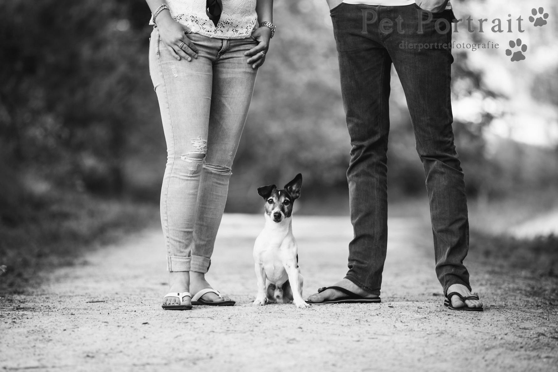 Hondenfotografie Wassenaar - Foto van de Dier en Baasje fotoshoot in de duinen voor Jack Russell Bono