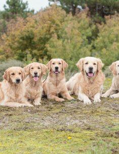 Dierenfotografie Tip - Achtergrond kiezen