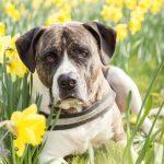 Hondenfotograaf Heemstede - Dier en Baasje fotoshoot in het bos