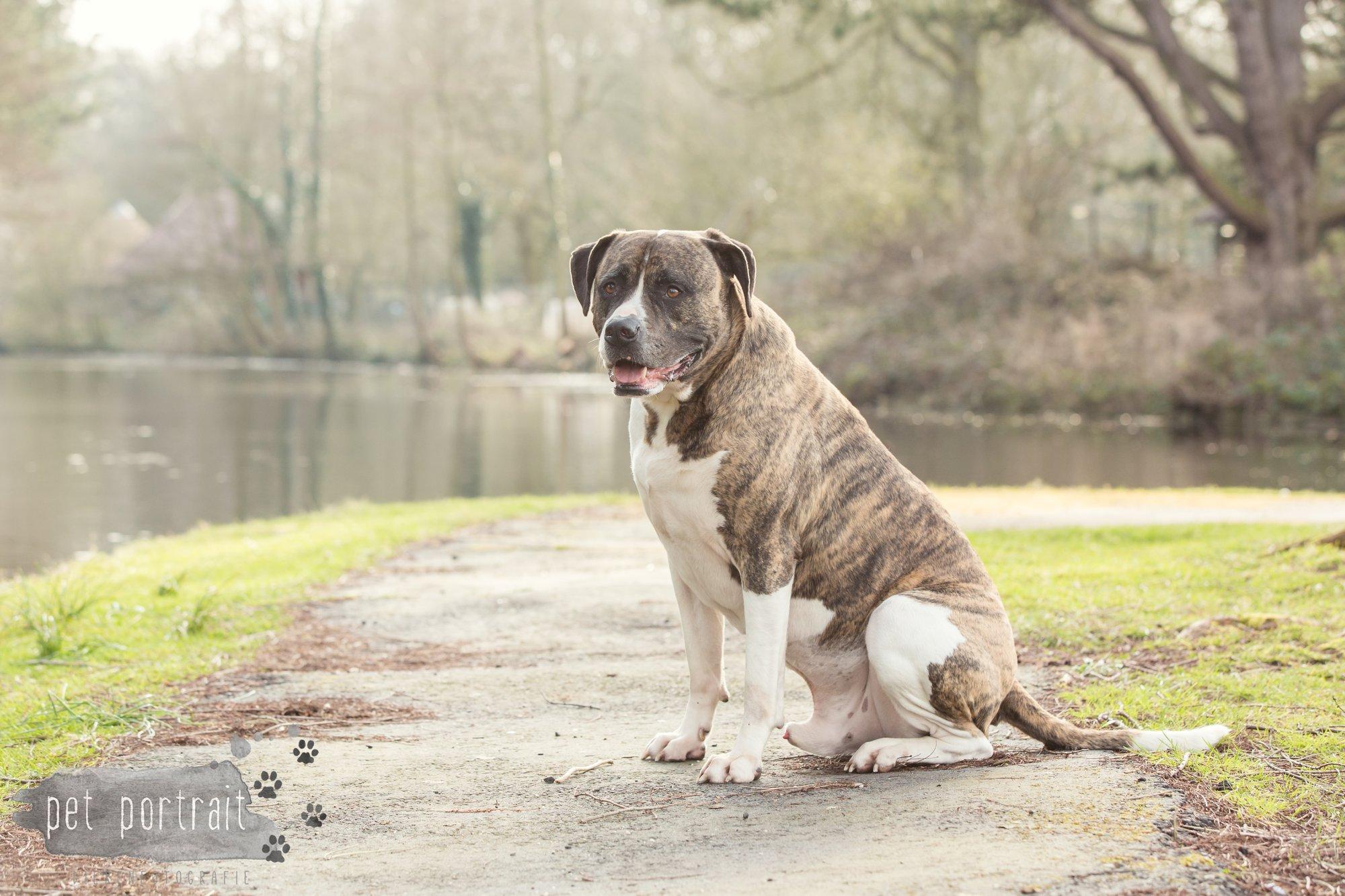 Hondenfotograaf Heemstede - Dier en Baasje fotoshoot in het bos-12