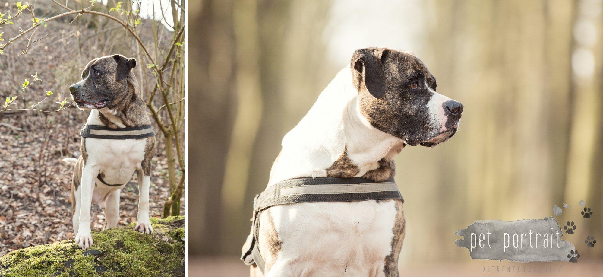 Hondenfotograaf Heemstede - Dier en Baasje fotoshoot in het bos-3