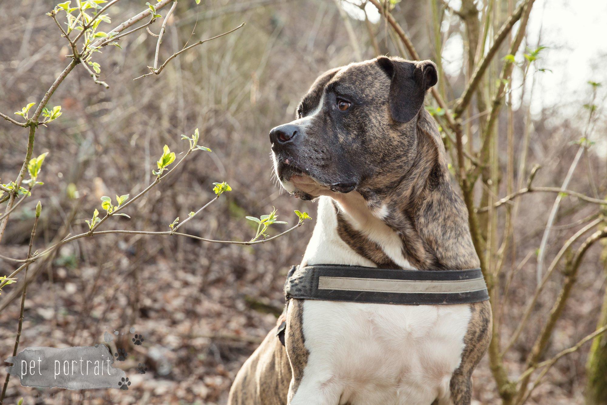 Hondenfotograaf Heemstede - Dier en Baasje fotoshoot in het bos-4