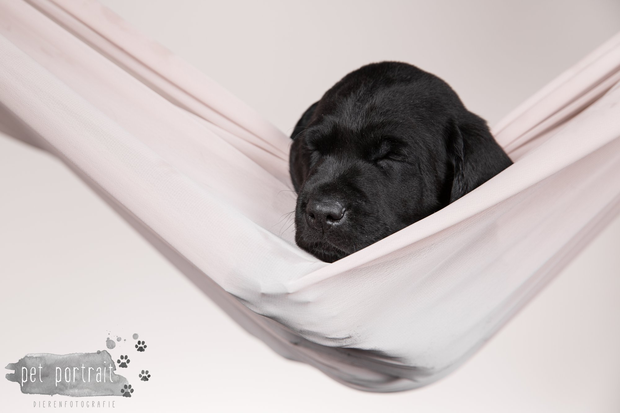 Hondenfotograaf Hillegom - Nestfotoshoot Labrador pups-18