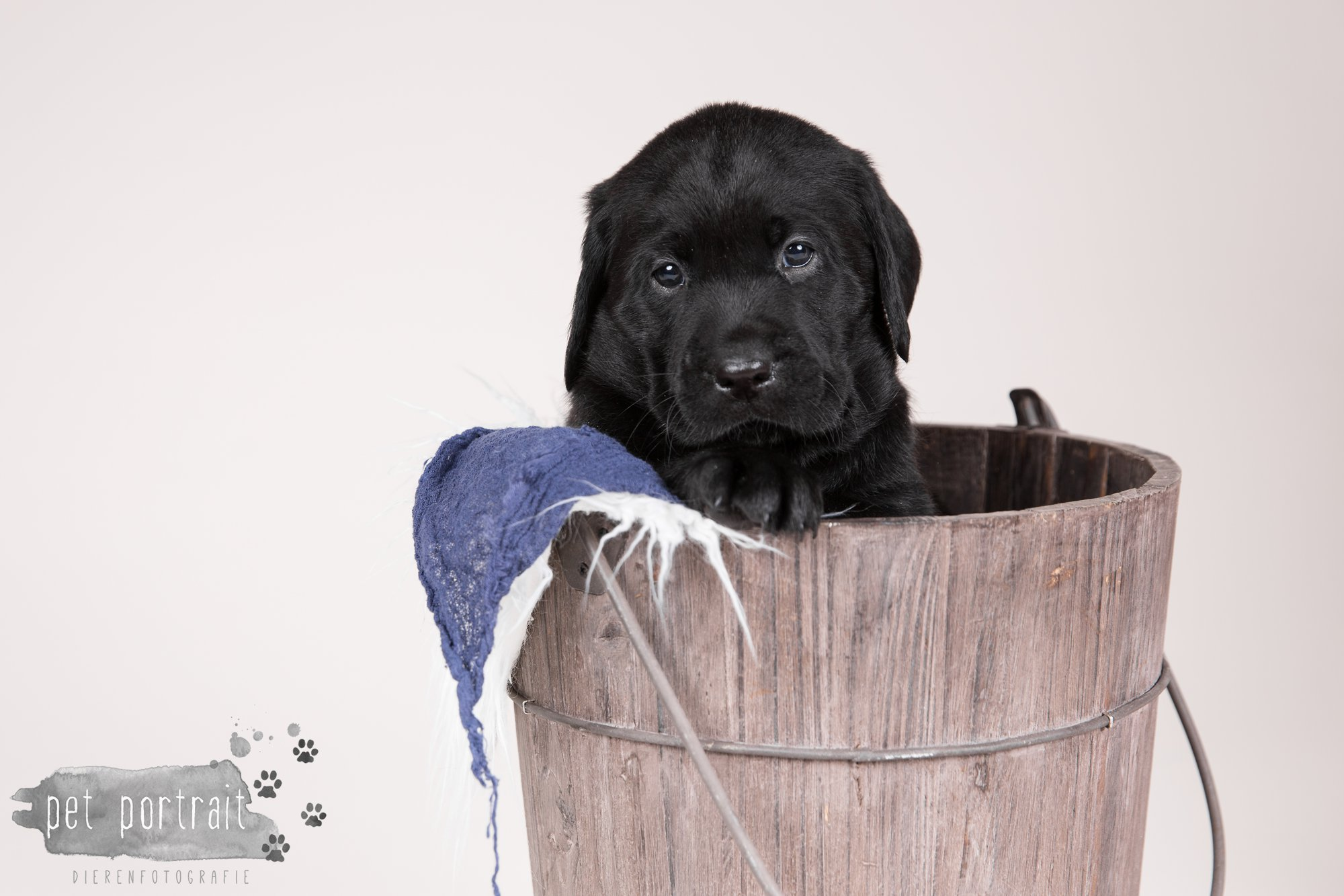 Hondenfotograaf Hillegom - Nestfotoshoot Labrador pups-3