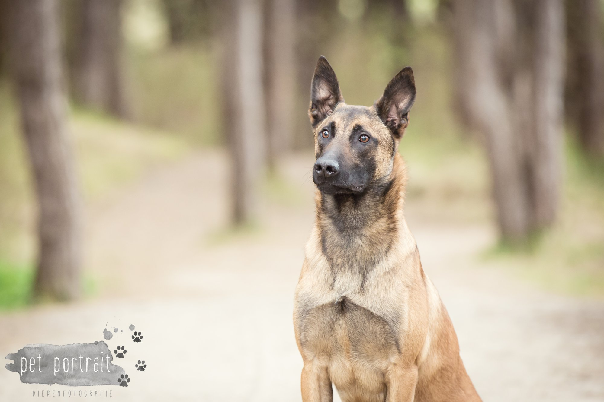 Hondenfotograaf Wassenaar - Mechelse Herder-1