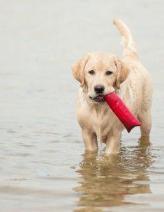 Hondenfotograaf Leiden - Labrador Freyja - maand april