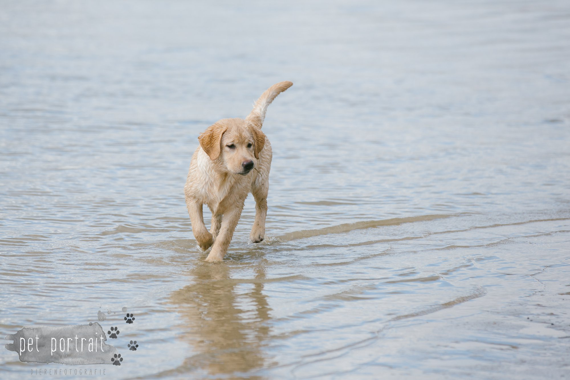 Hondenfotograaf Pet Portrait - Clubdag LKN - Waterpret met het nestje van Juno-12