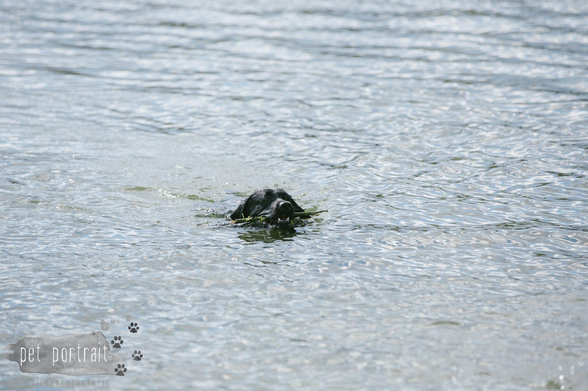 Hondenfotograaf Pet Portrait - Clubdag LKN - Waterpret met het nestje van Juno-13