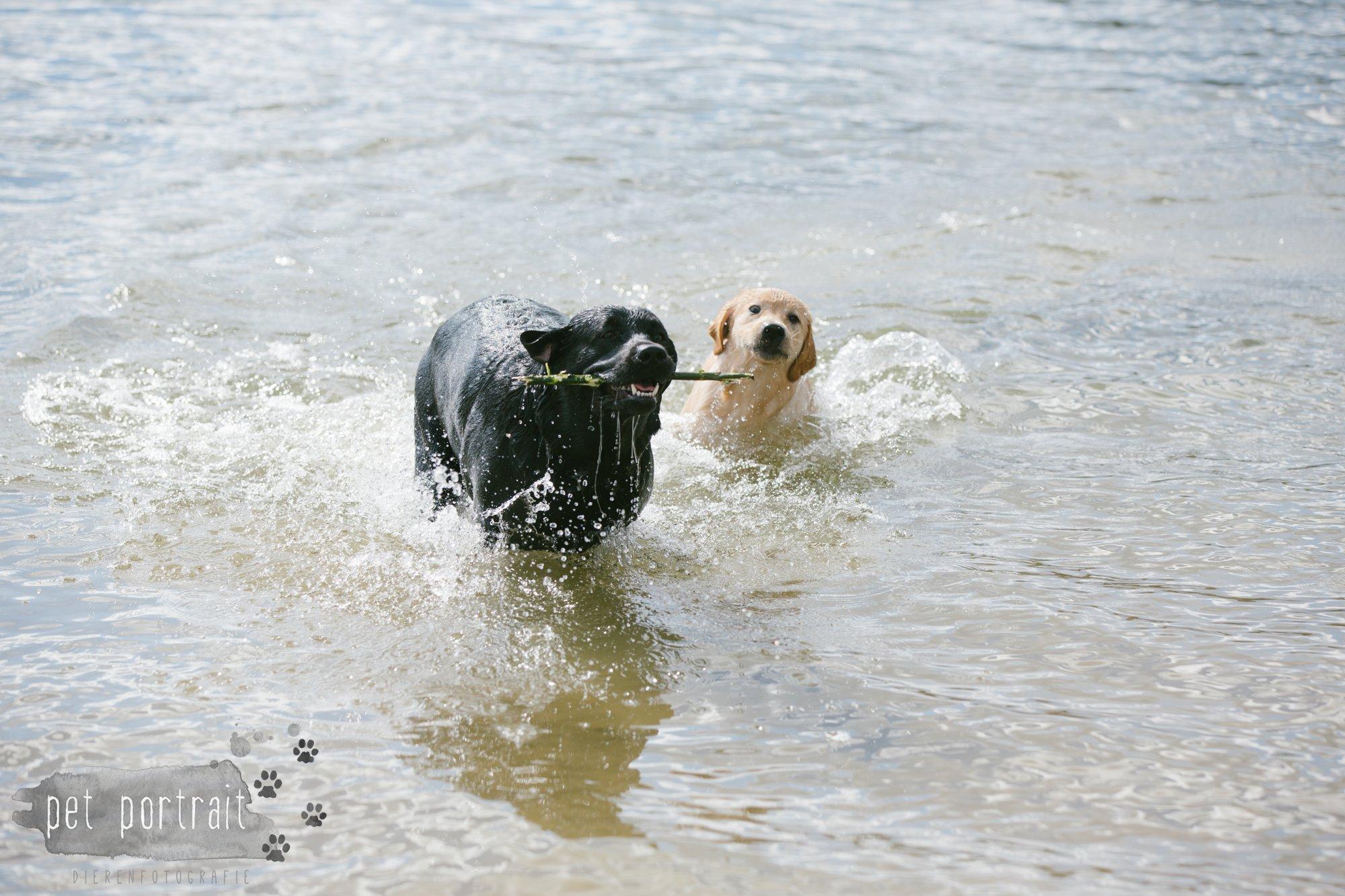 Hondenfotograaf Pet Portrait - Clubdag LKN - Waterpret met het nestje van Juno-14
