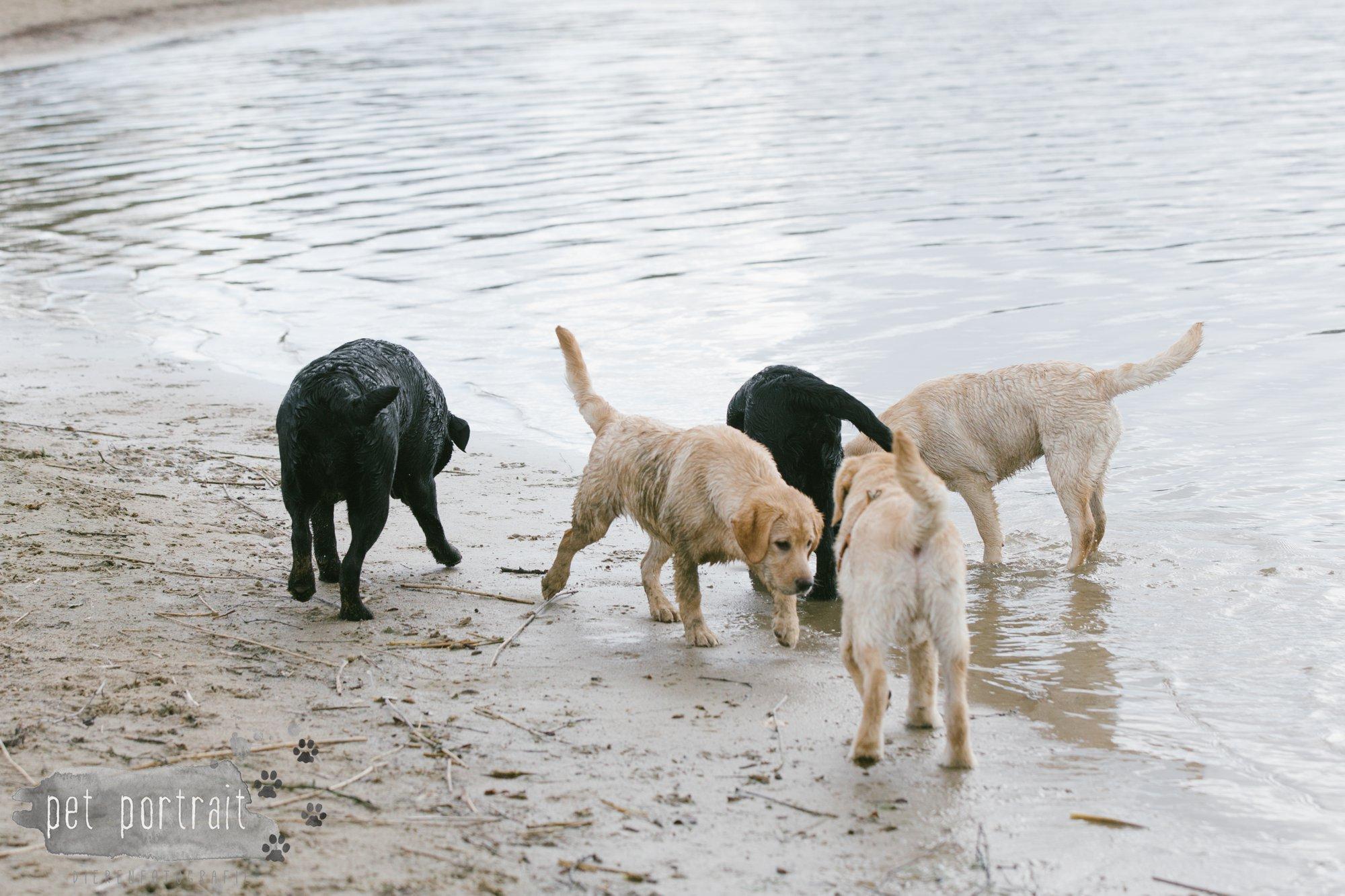 Hondenfotograaf Pet Portrait - Clubdag LKN - Waterpret met het nestje van Juno-16