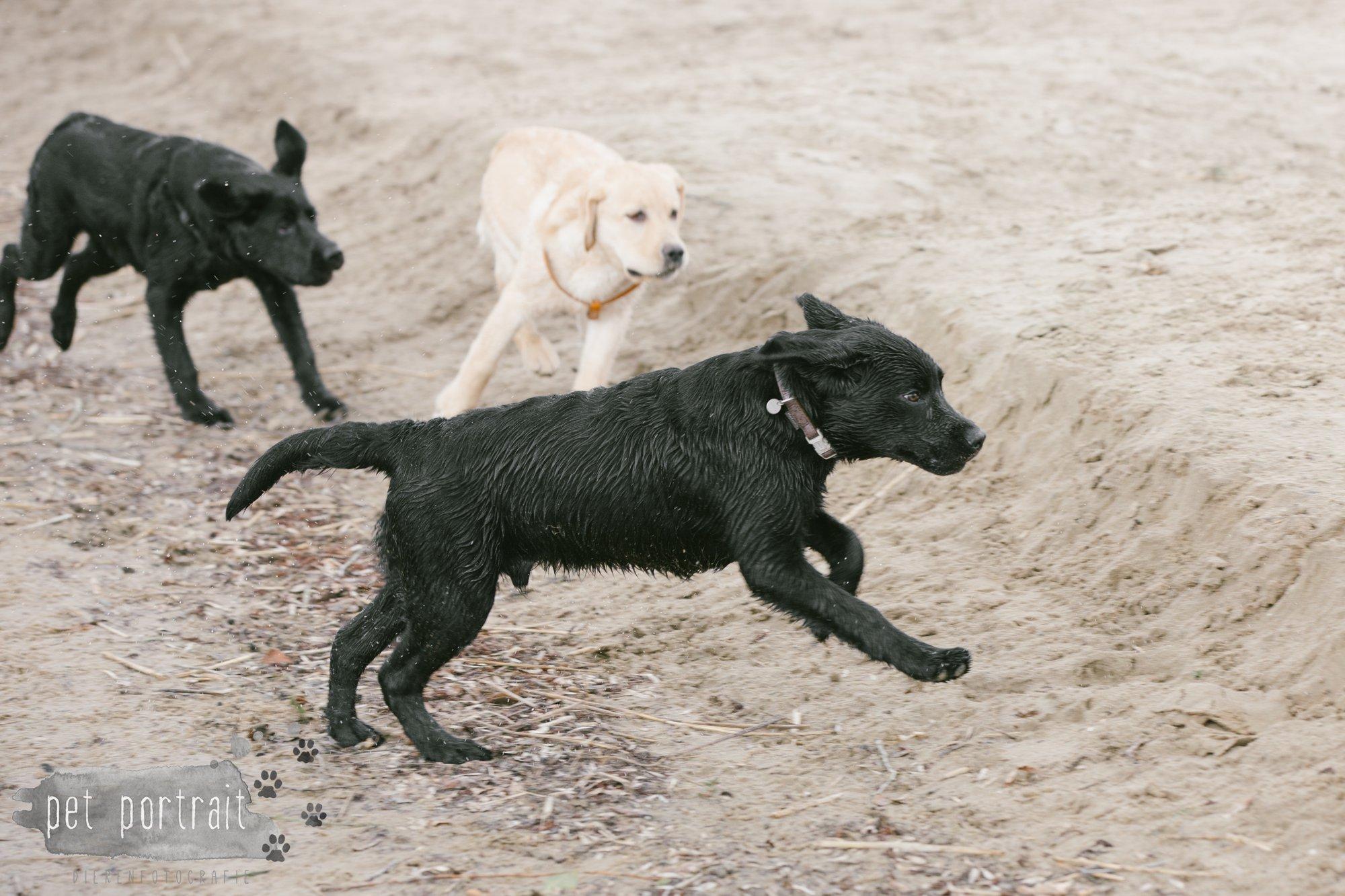 Hondenfotograaf Pet Portrait - Clubdag LKN - Waterpret met het nestje van Juno-18