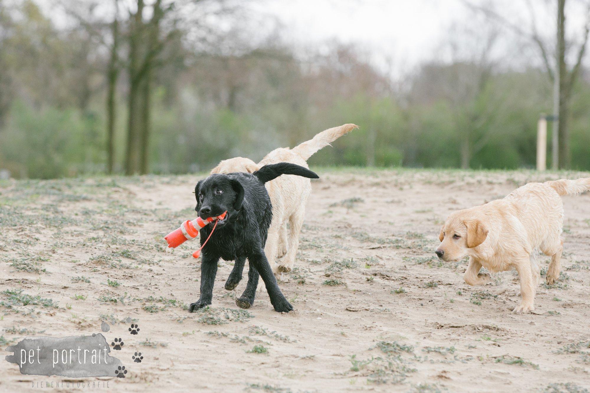 Hondenfotograaf Pet Portrait - Clubdag LKN - Waterpret met het nestje van Juno-19