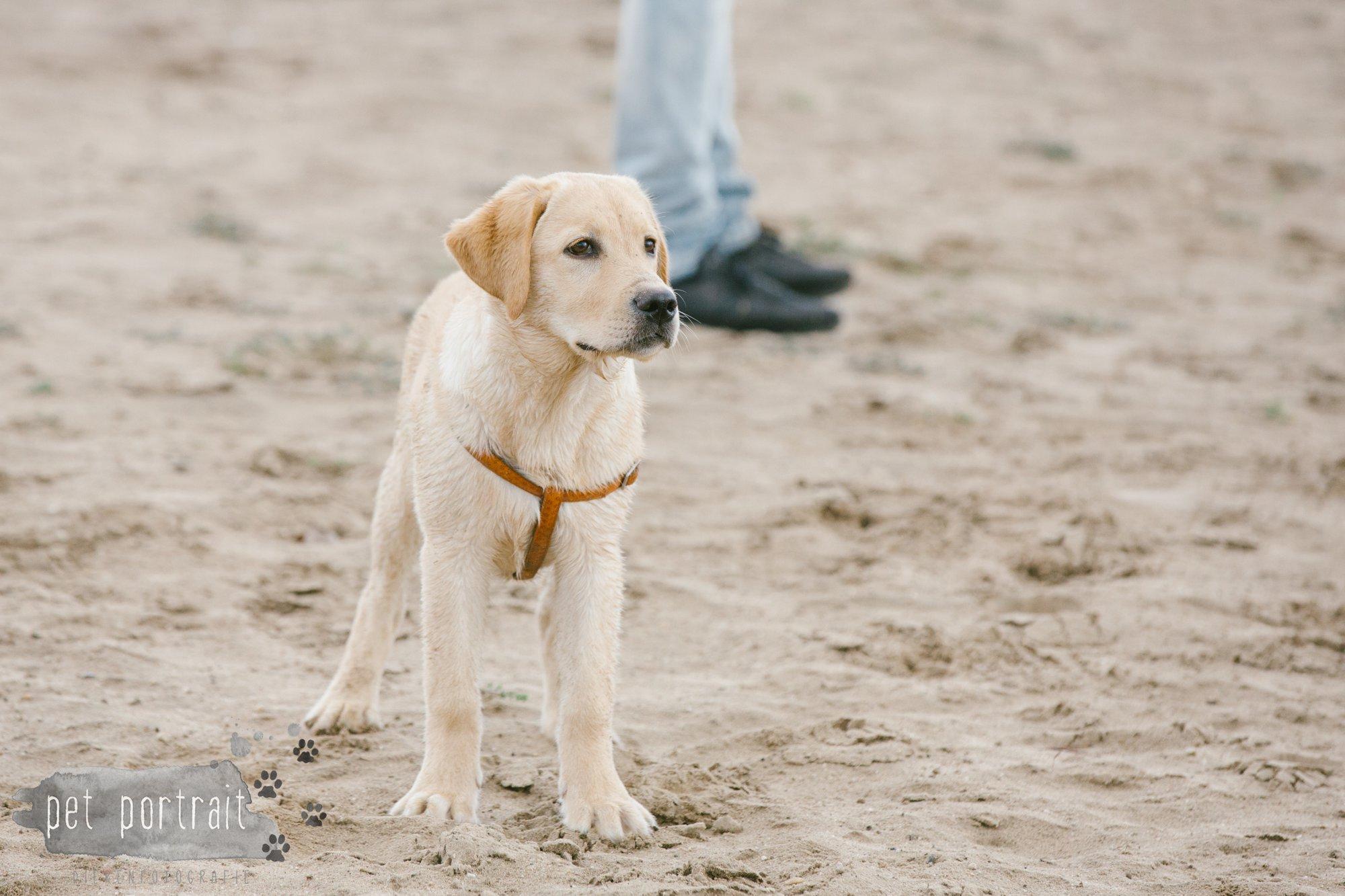 Hondenfotograaf Pet Portrait - Clubdag LKN - Waterpret met het nestje van Juno-20
