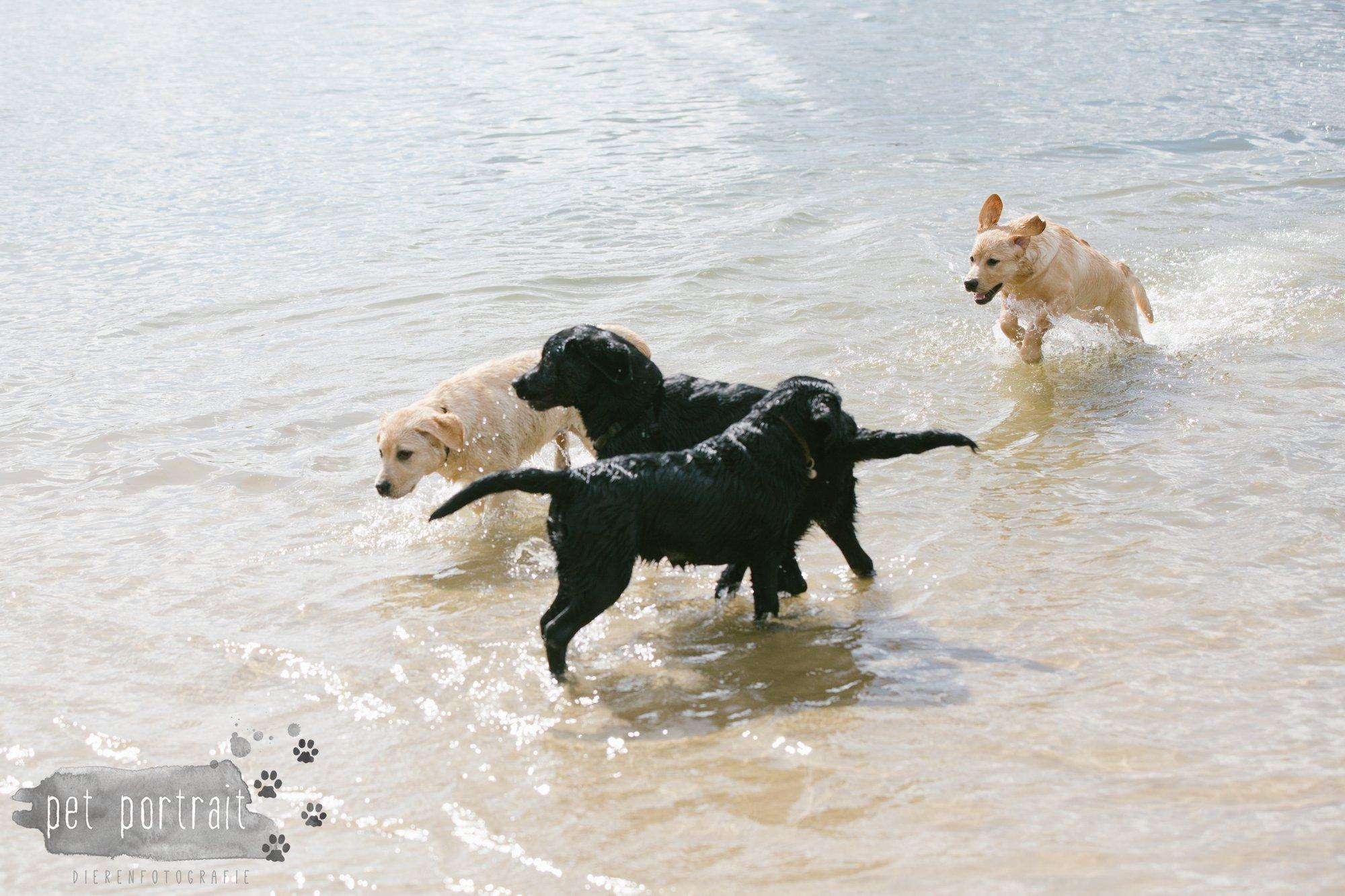 Hondenfotograaf Pet Portrait - Clubdag LKN - Waterpret met het nestje van Juno-8