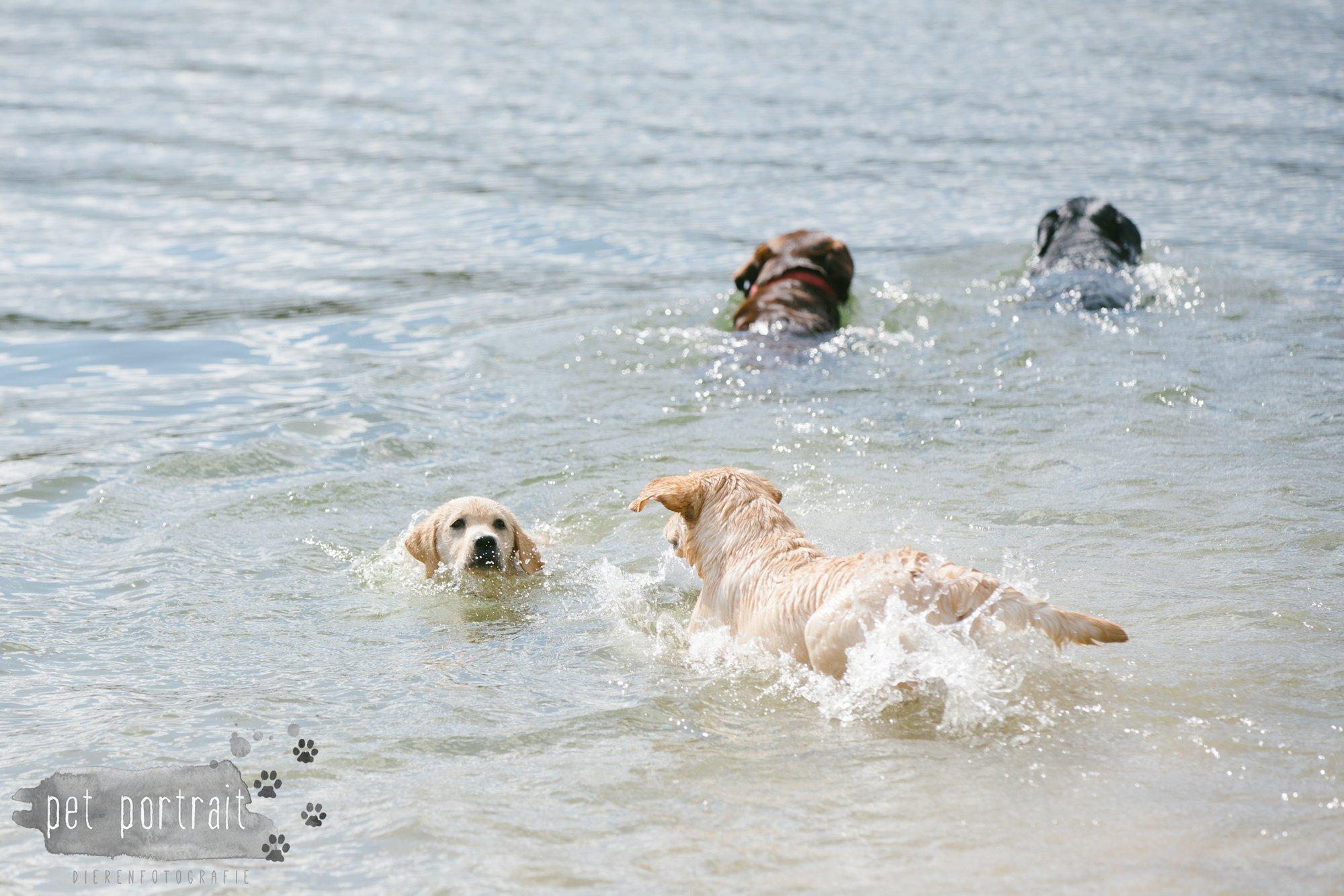 Hondenfotograaf Pet Portrait - Clubdag LKN - Waterpret met het nestje van Juno-9