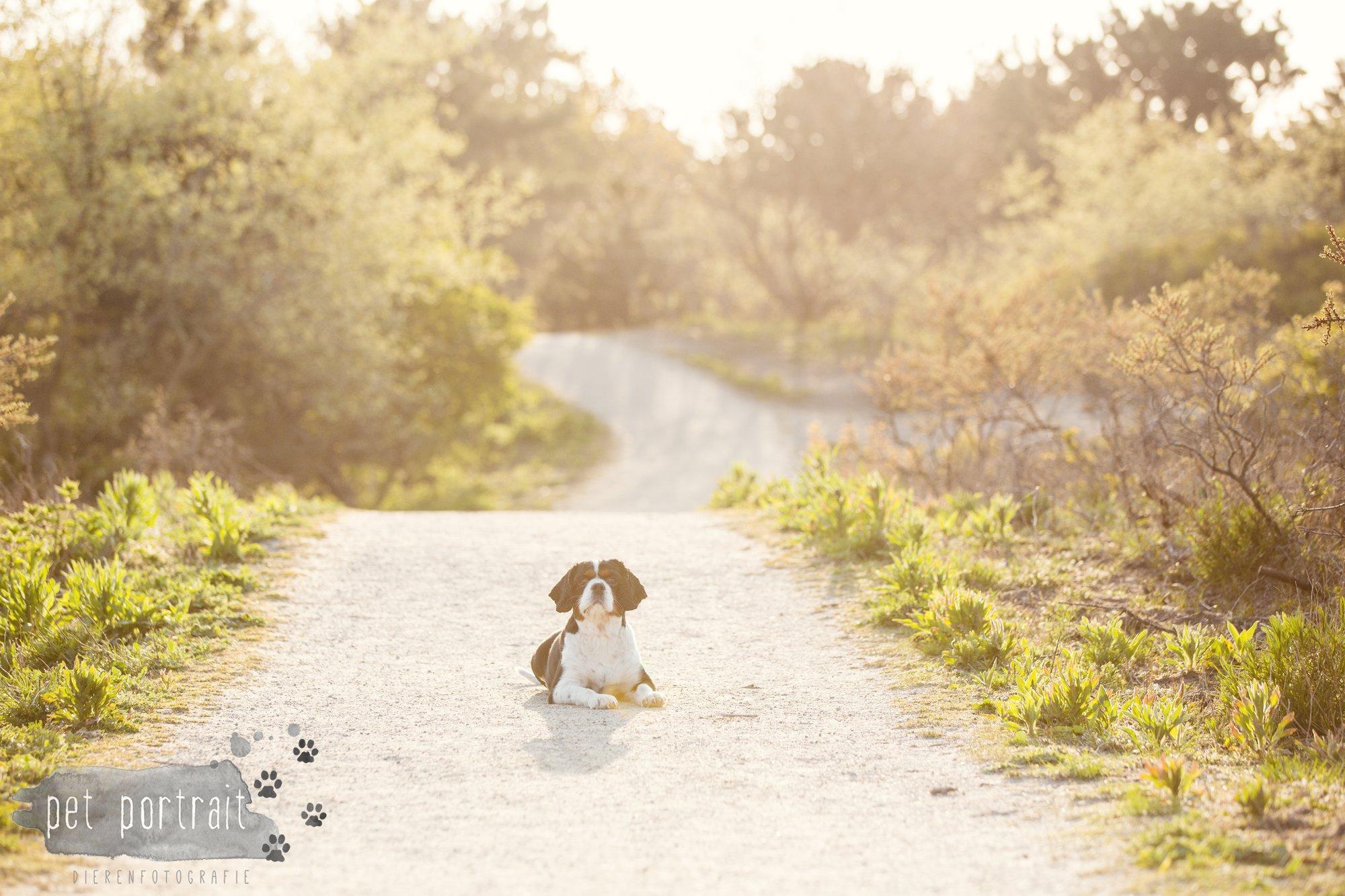 Hondenfotograaf Wassenaar - Cavalier King Charles Spaniel Pepper-12
