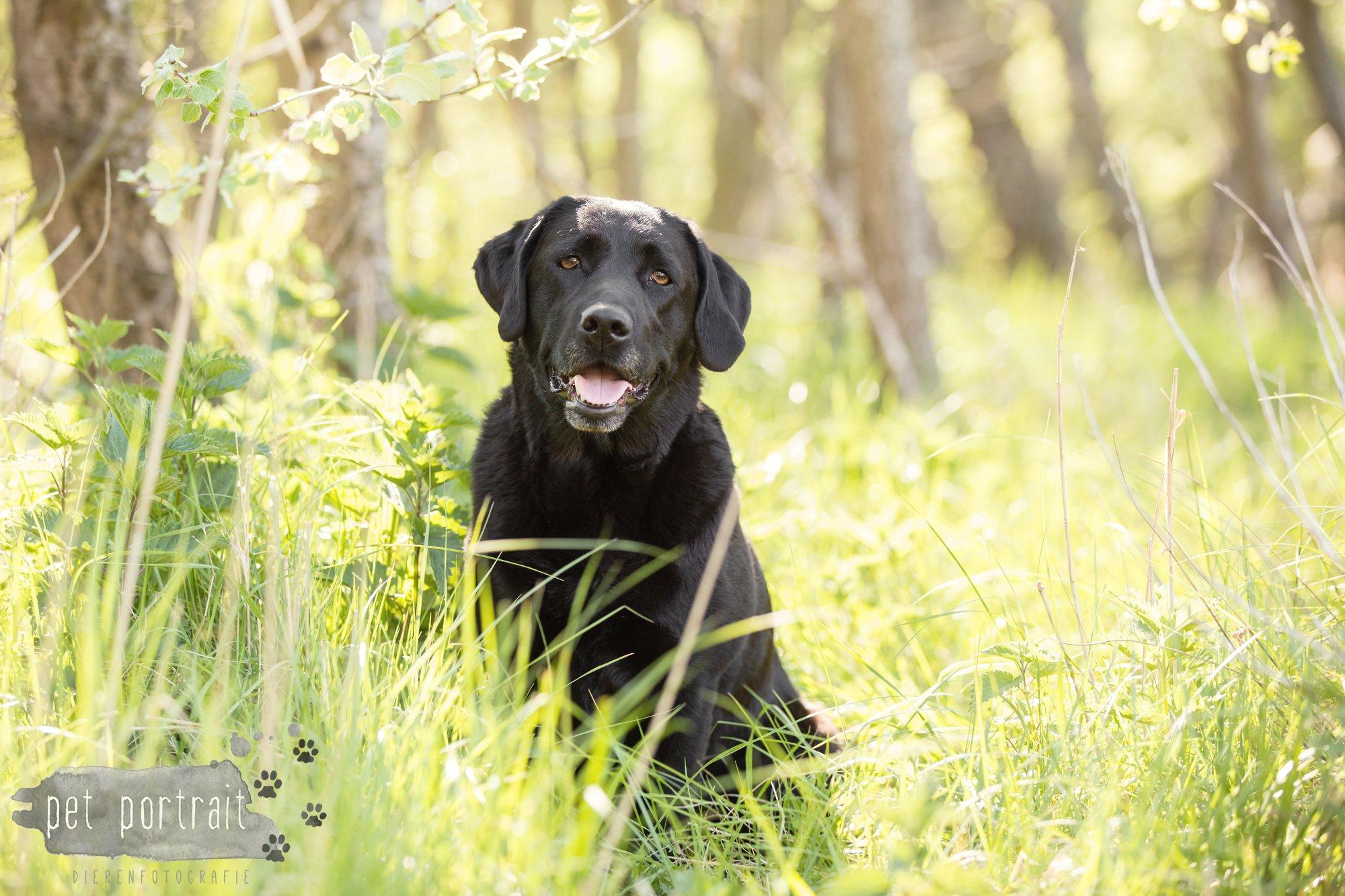 Hondenfotograaf Wassenaar - Beloved Dier en Baasje fotoshoot in de duinen-10