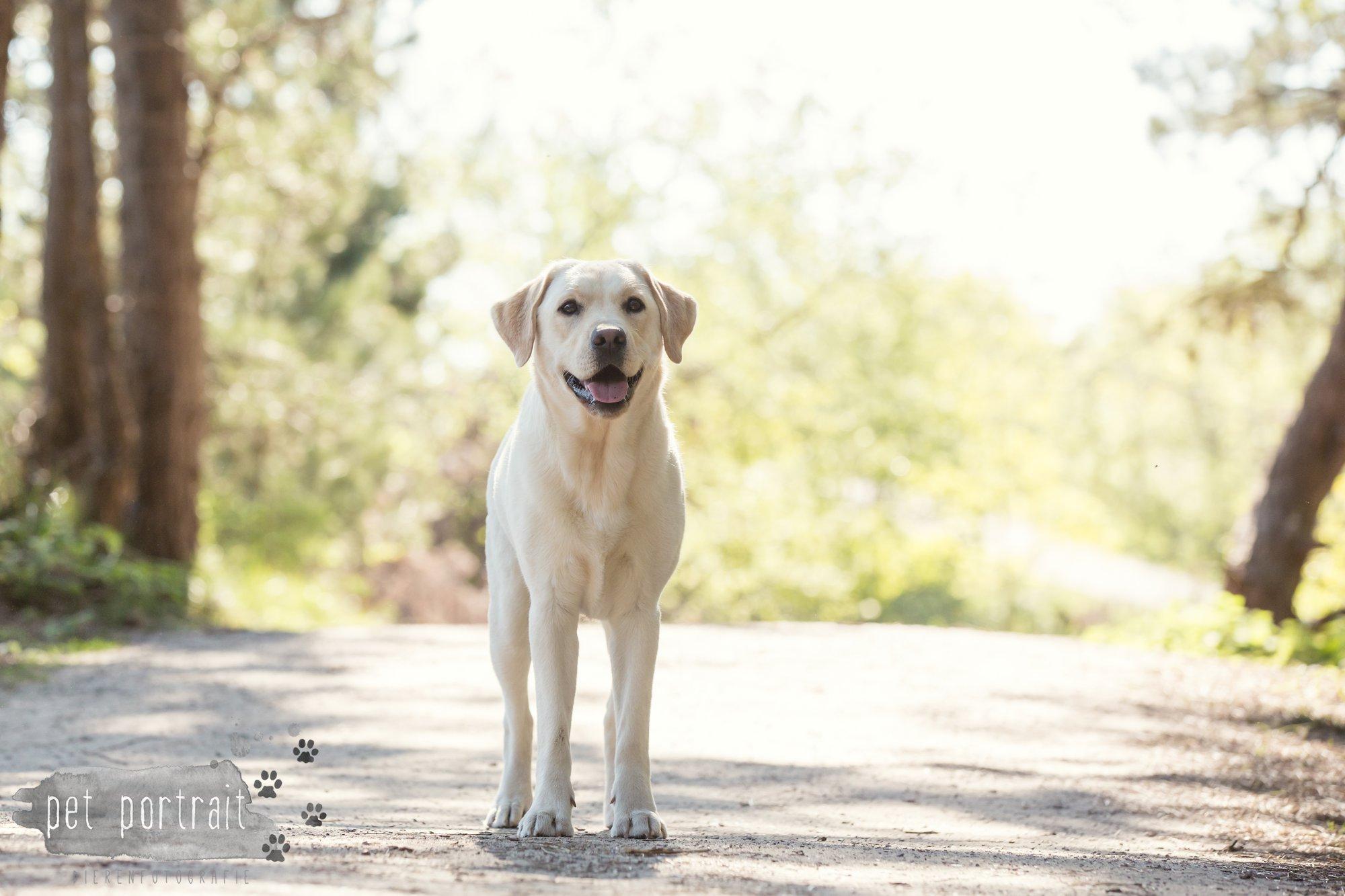 Hondenfotograaf Wassenaar - Beloved Dier en Baasje fotoshoot in de duinen-13