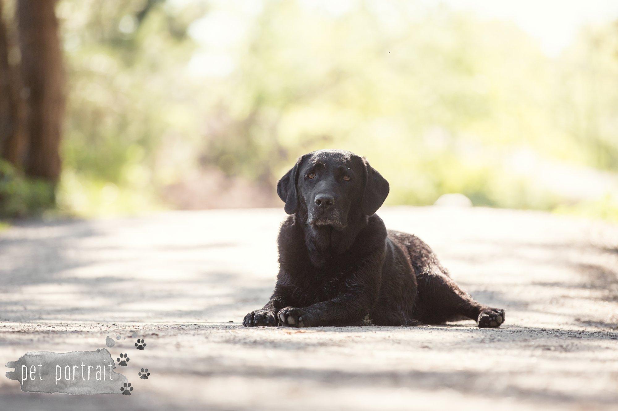 Hondenfotograaf Wassenaar - Beloved Dier en Baasje fotoshoot in de duinen-15