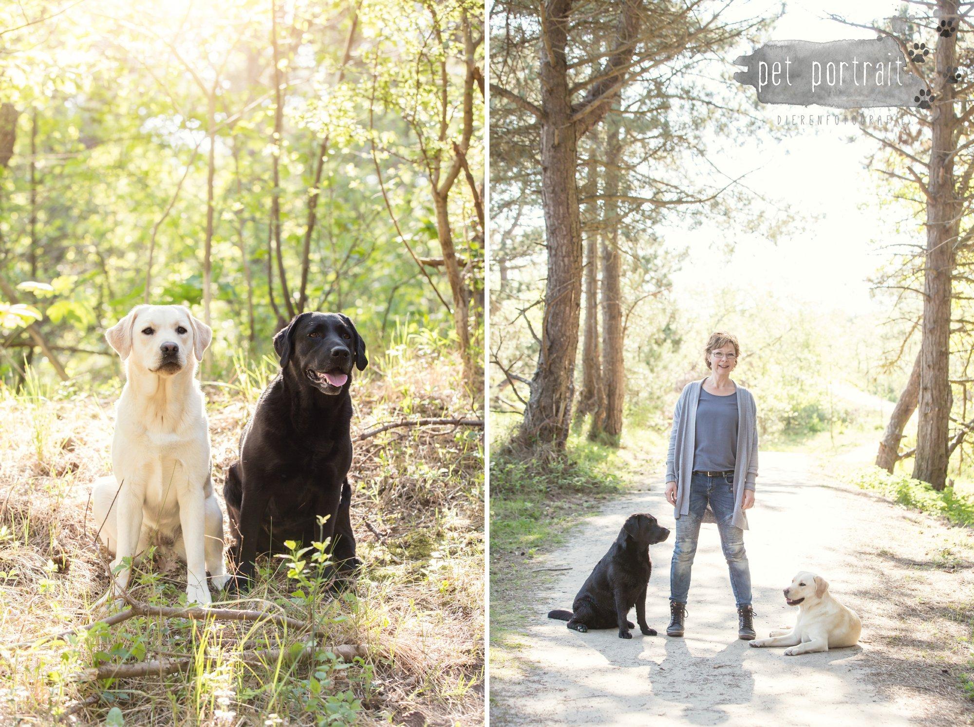 Hondenfotograaf Wassenaar - Beloved Dier en Baasje fotoshoot in de duinen-2