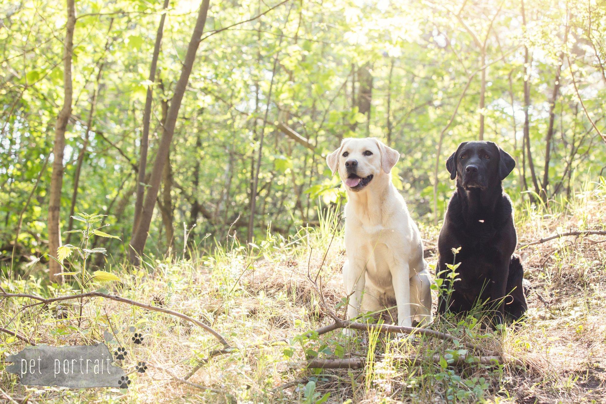 Hondenfotograaf Wassenaar - Beloved Dier en Baasje fotoshoot in de duinen-3