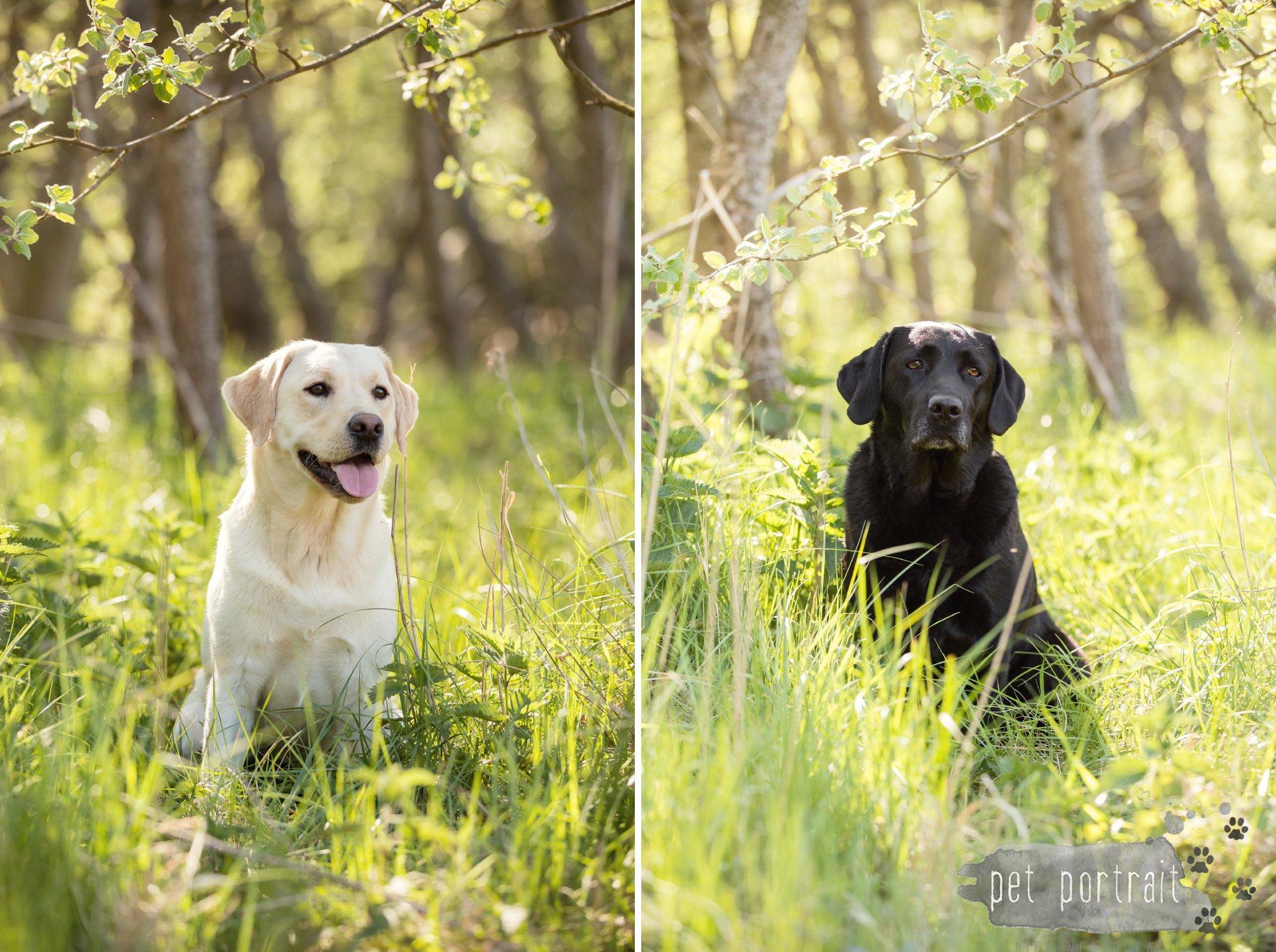 Hondenfotograaf Wassenaar - Beloved Dier en Baasje fotoshoot in de duinen-7