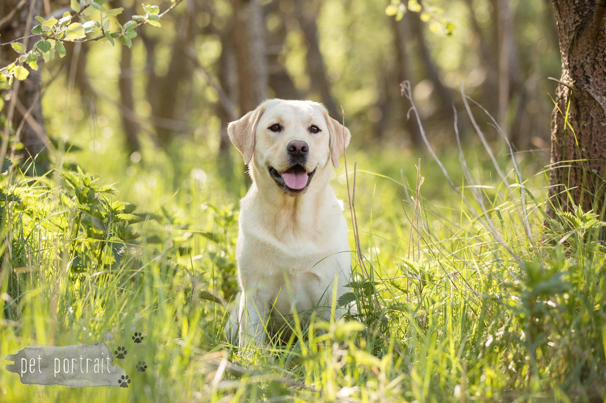 Hondenfotograaf Wassenaar - Beloved Dier en Baasje fotoshoot in de duinen-8