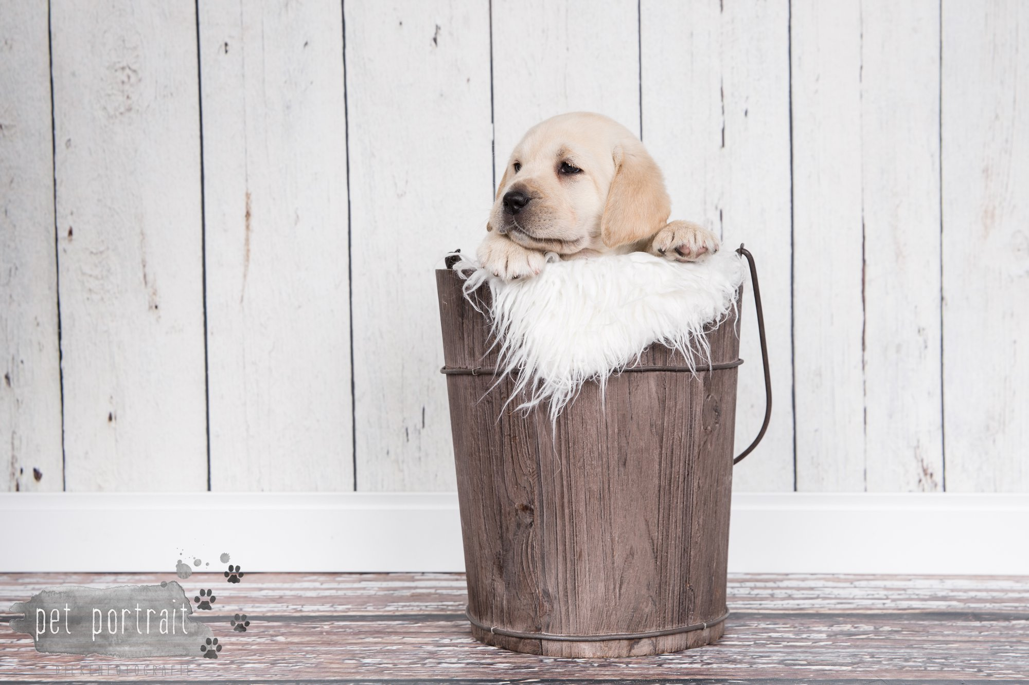 Hondenfotograaf Hillegom - Nestfotoshoot voor Labrador pups-30