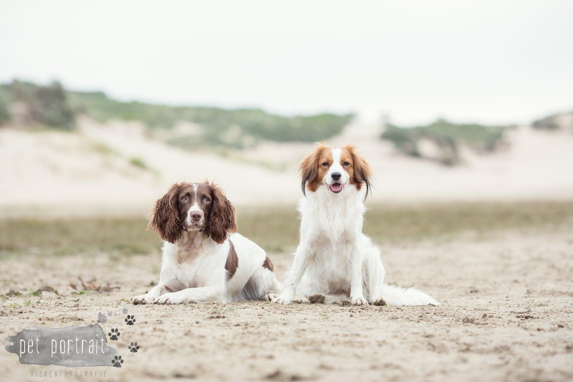 Hondenfotograaf Noordwijk - Springer Spaniel en Kooikerhondje-2