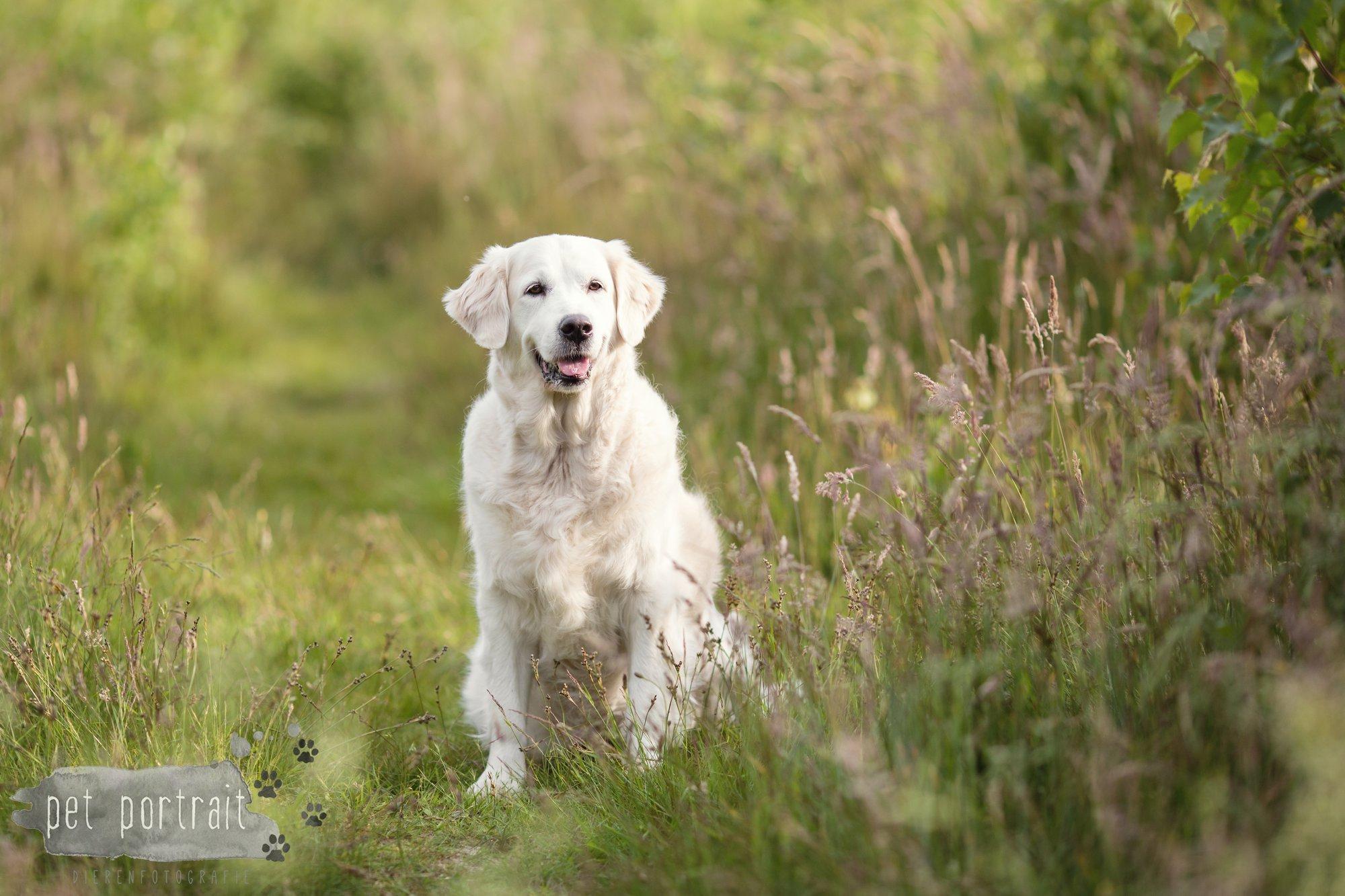 Hondenfotograaf Soest - Dier en Baasje fotoshoot in de Soesterduinen-1