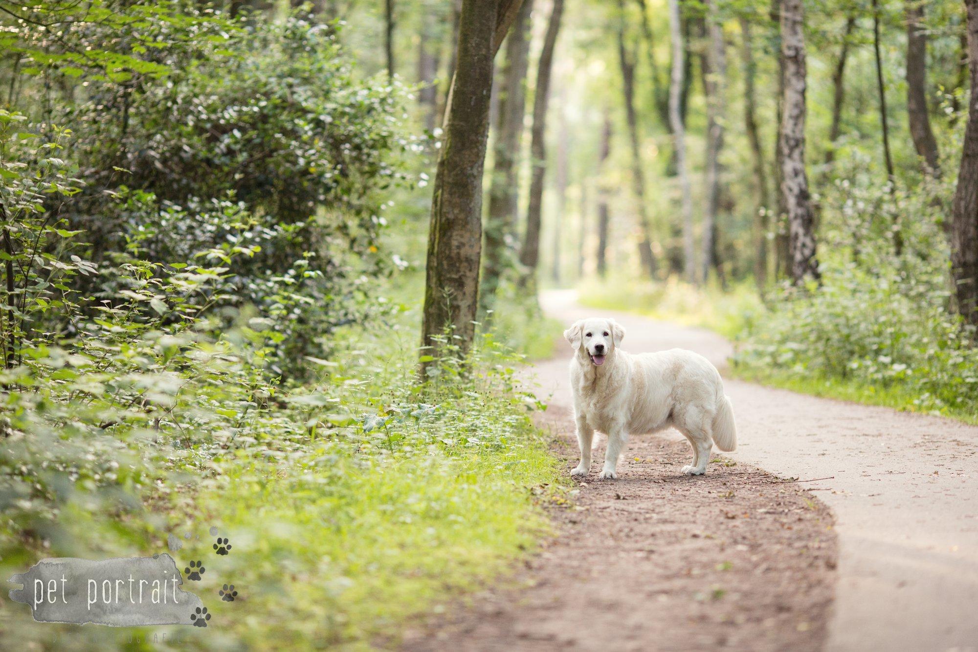 Hondenfotograaf Soest - Dier en Baasje fotoshoot in de Soesterduinen-15