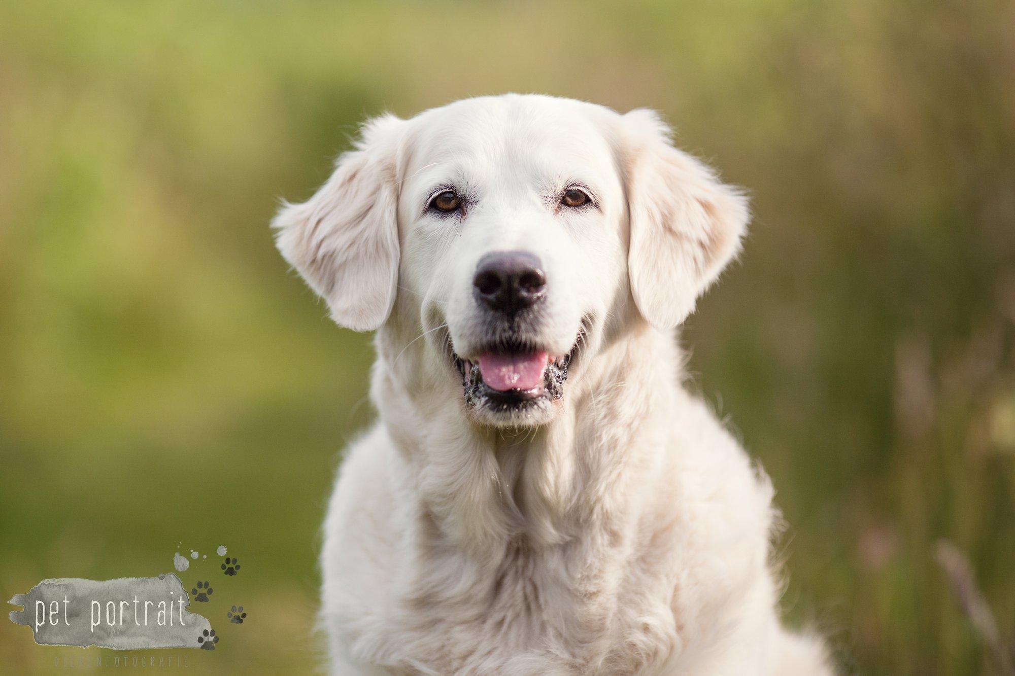 Hondenfotograaf Soest - Dier en Baasje fotoshoot in de Soesterduinen-2