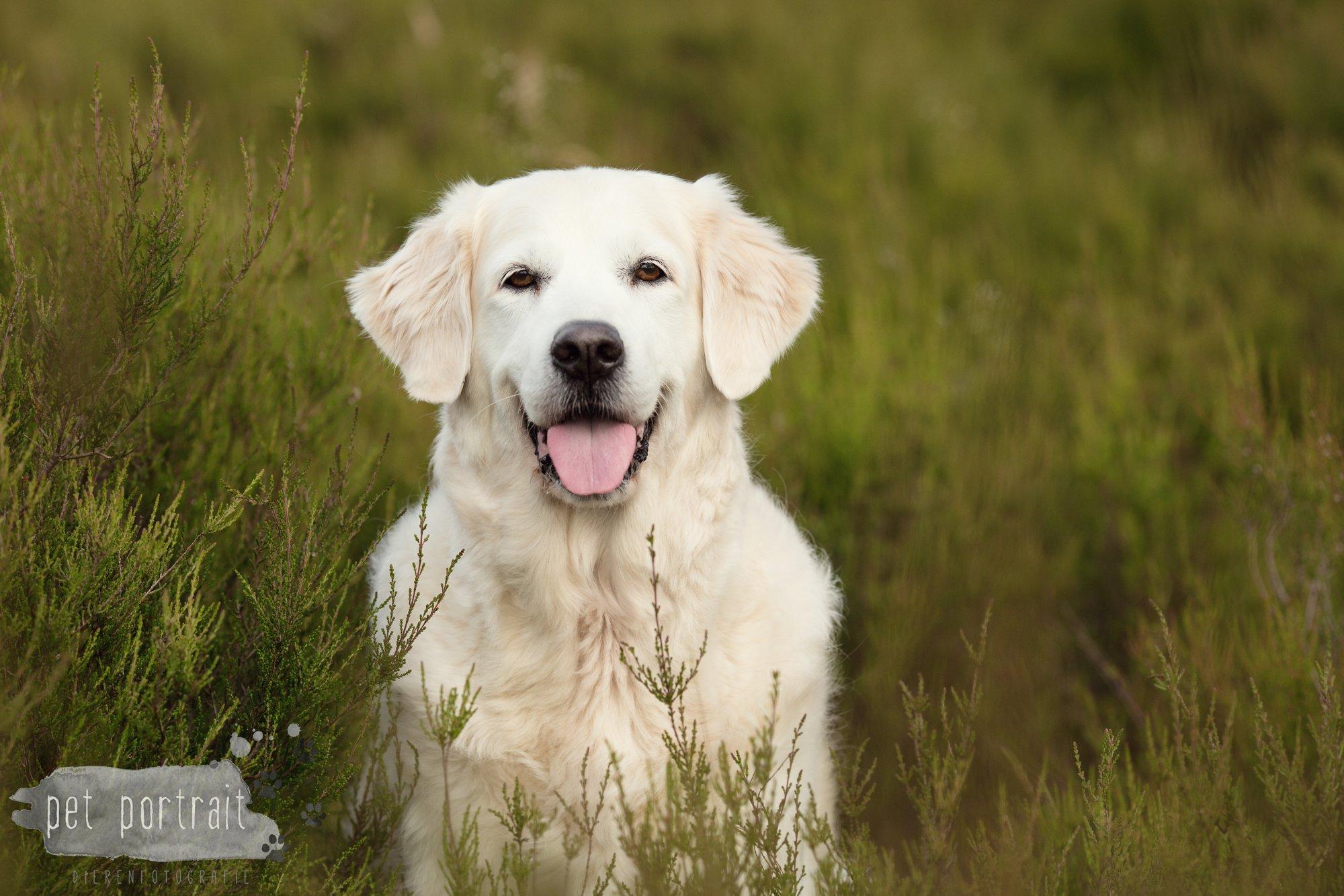 Hondenfotograaf Soest - Dier en Baasje fotoshoot in de Soesterduinen-5