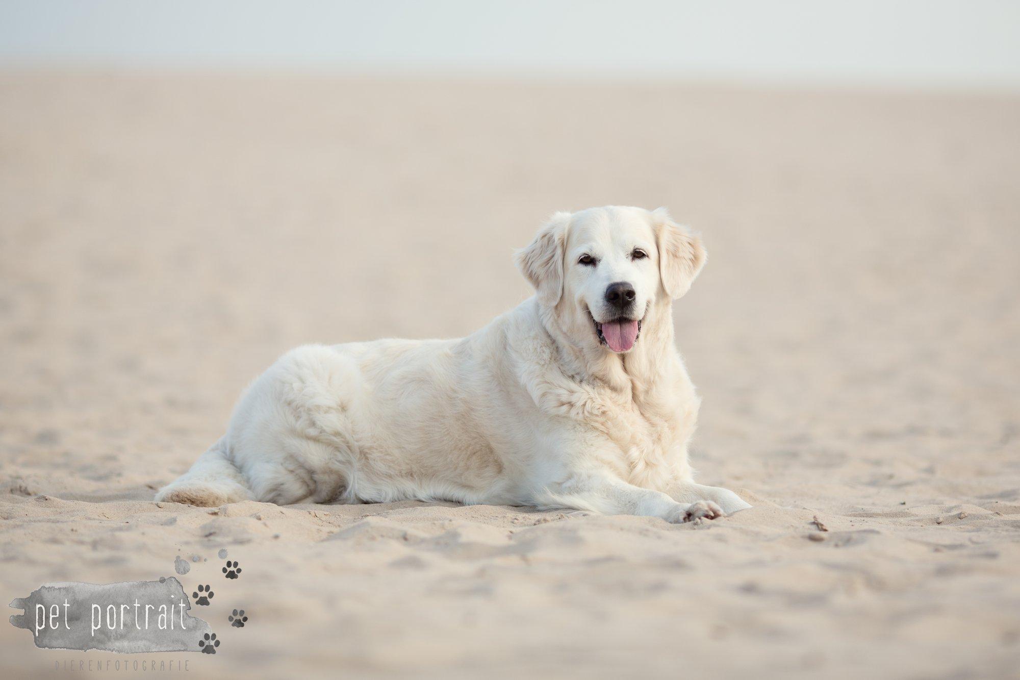 Hondenfotograaf Soest - Dier en Baasje fotoshoot in de Soesterduinen-9