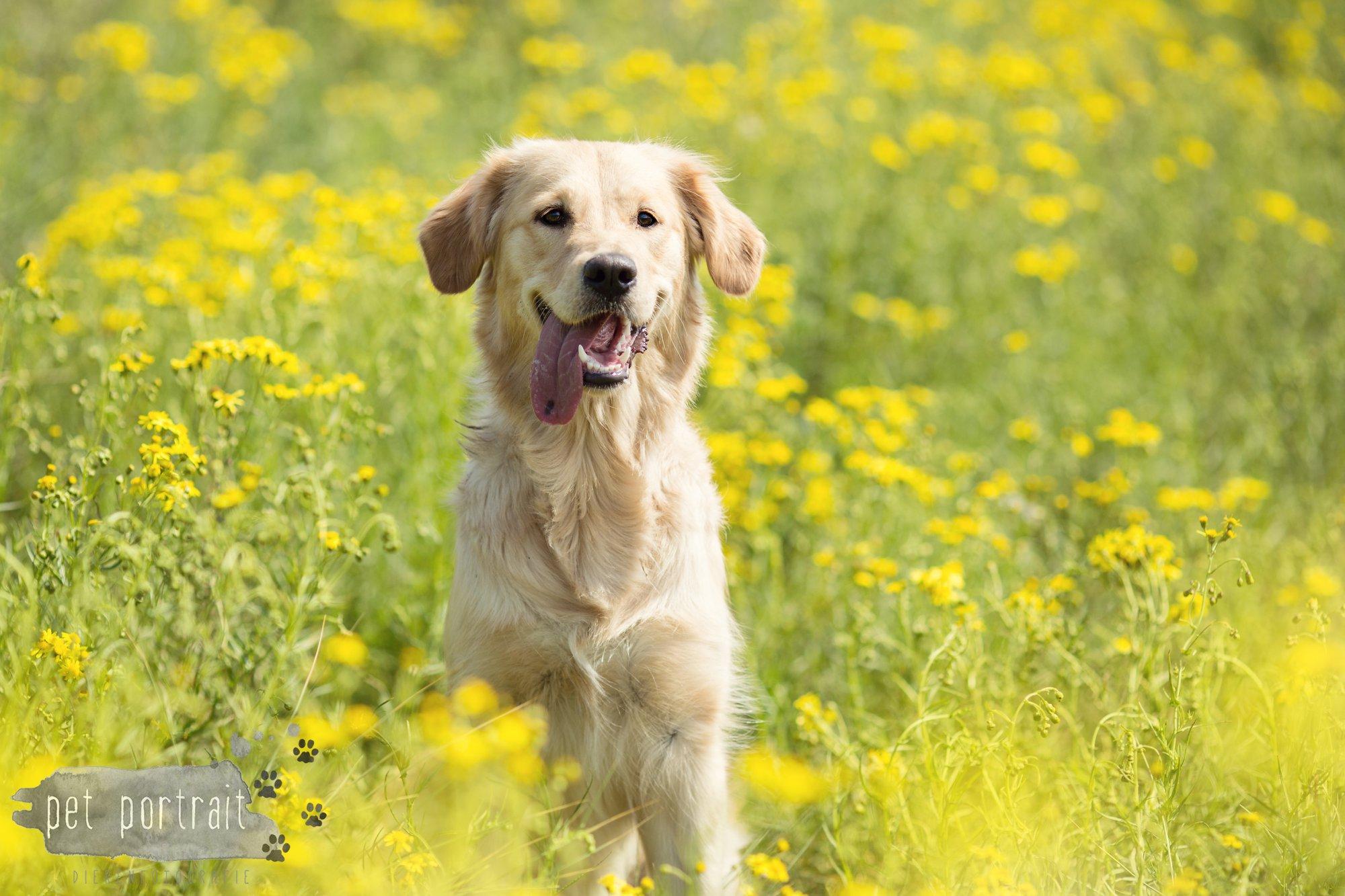 Doggy Treasure Hunt-12