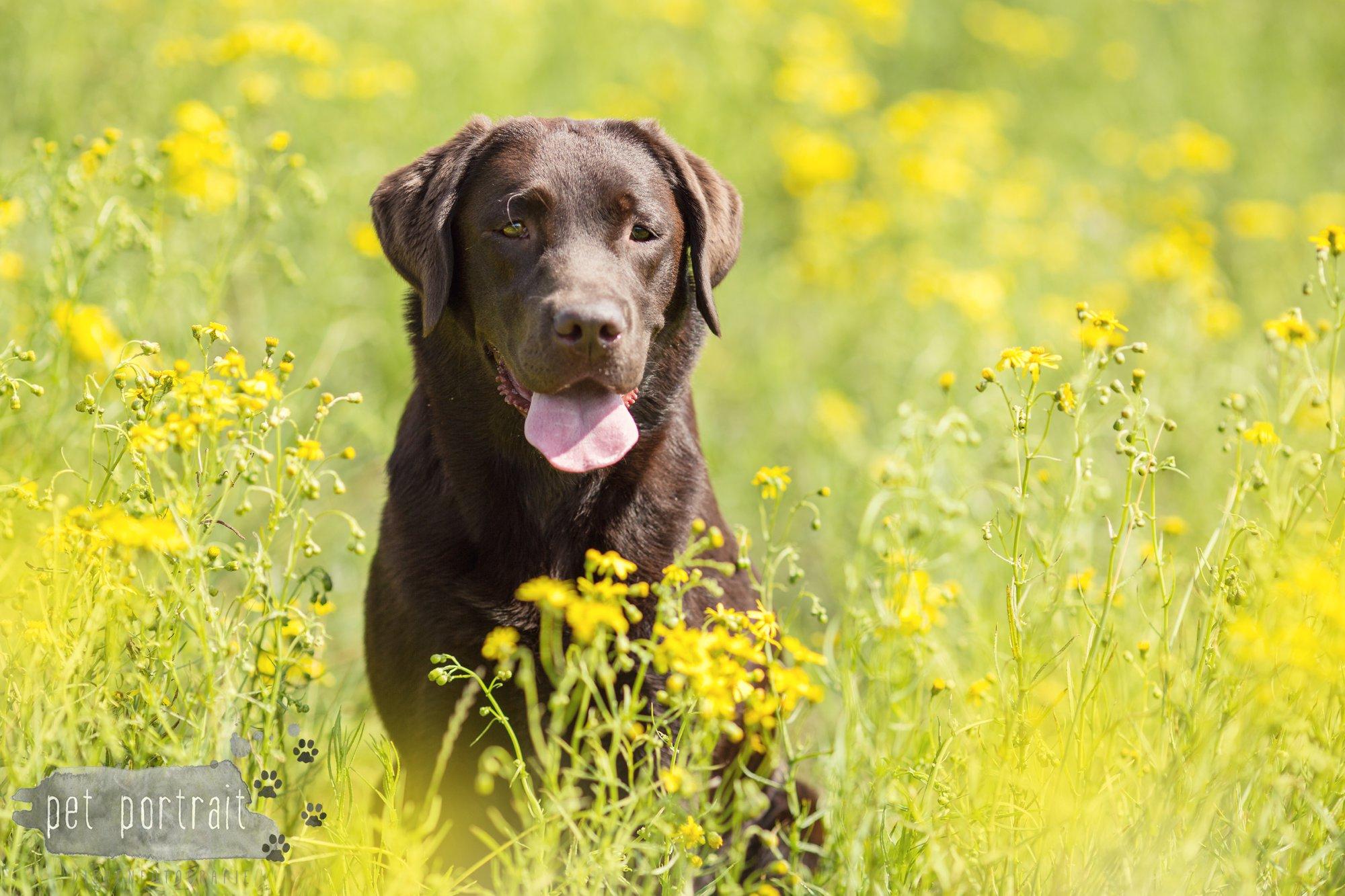 Hondenfotograaf - Doggy Treasure Hunt - De Winnaars