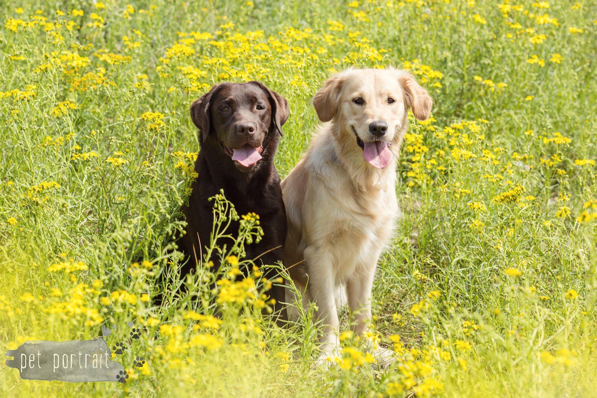 Doggy Treasure Hunt-15