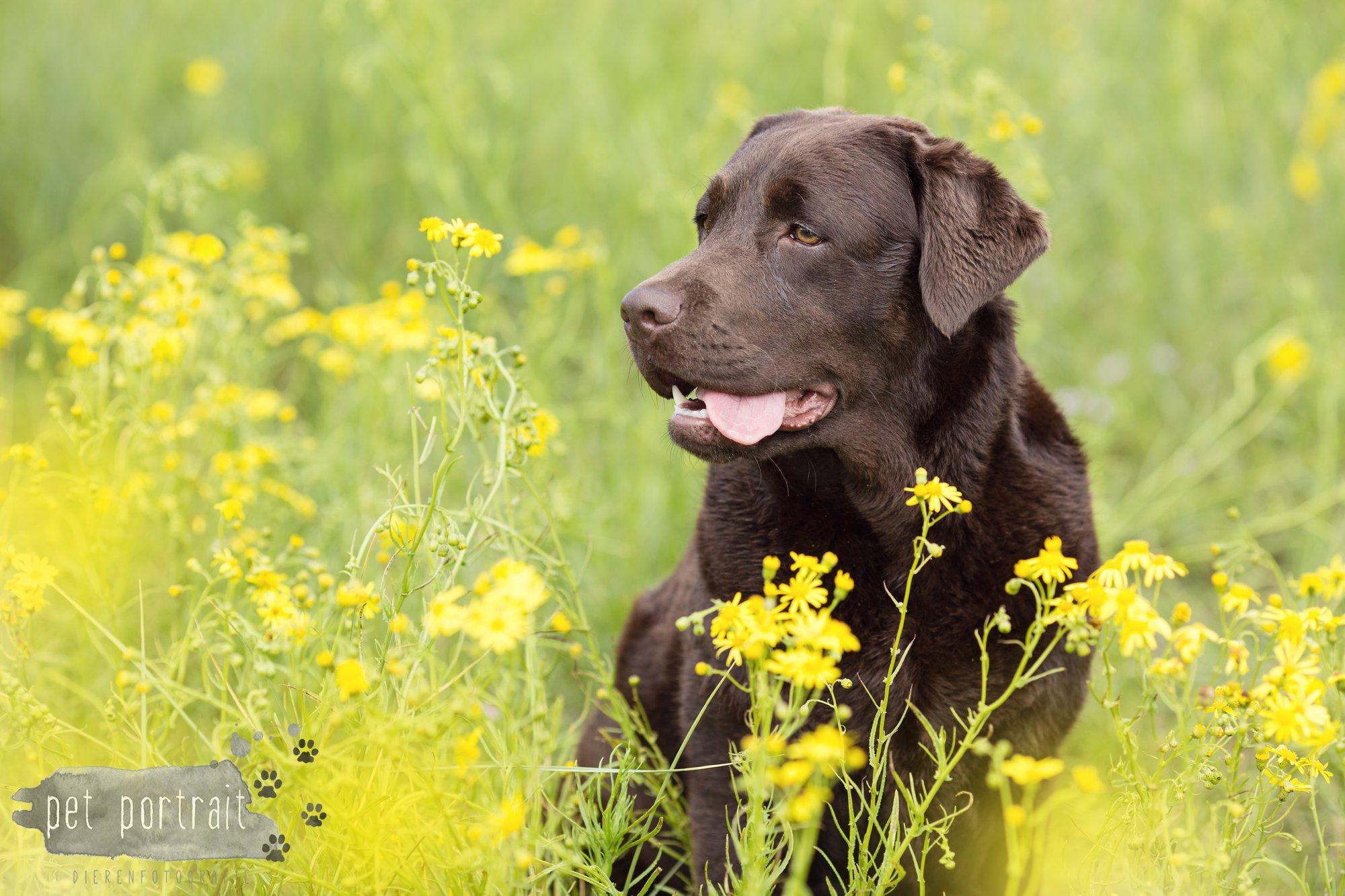 Doggy Treasure Hunt-16
