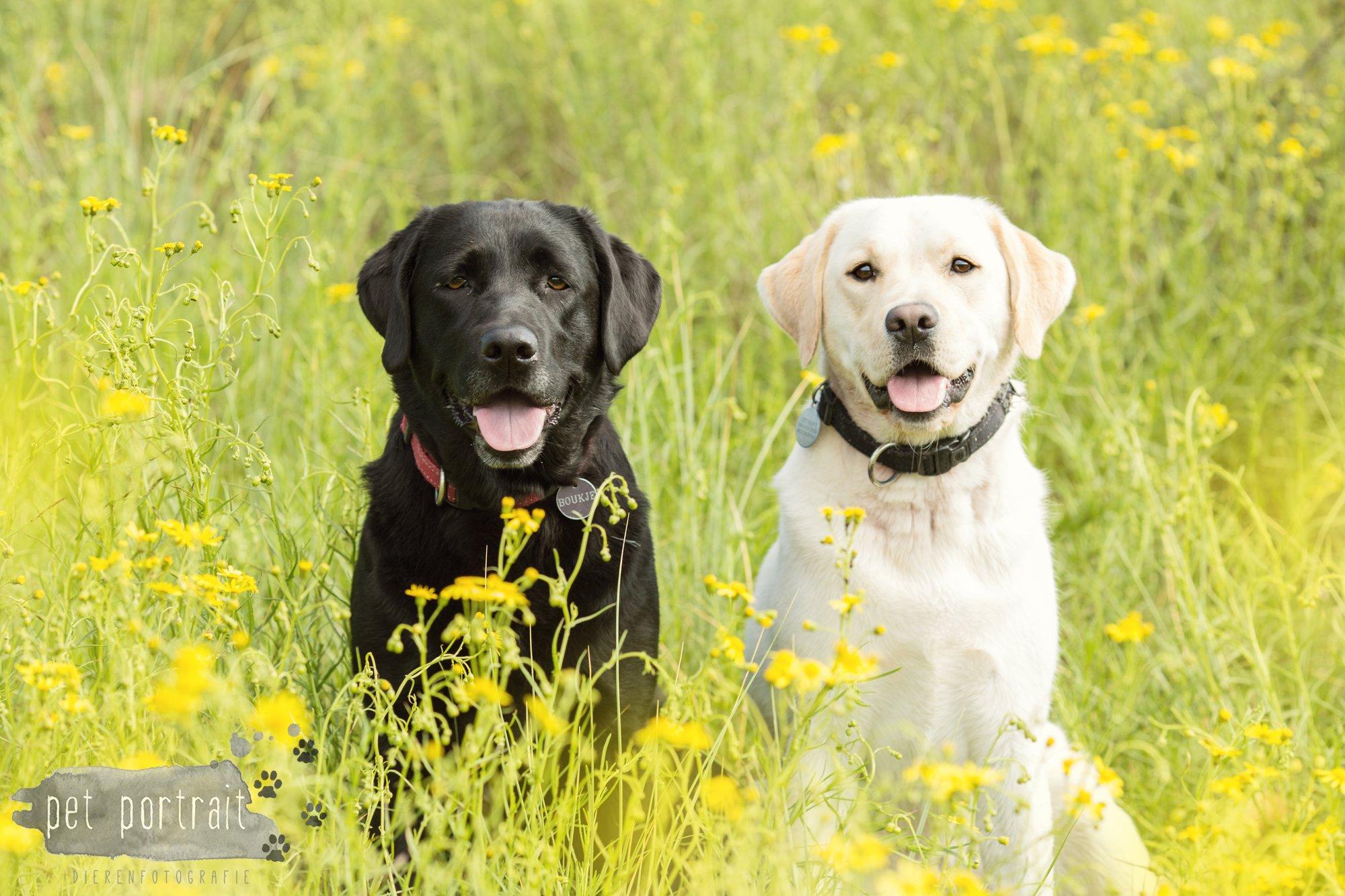 Doggy Treasure Hunt-2