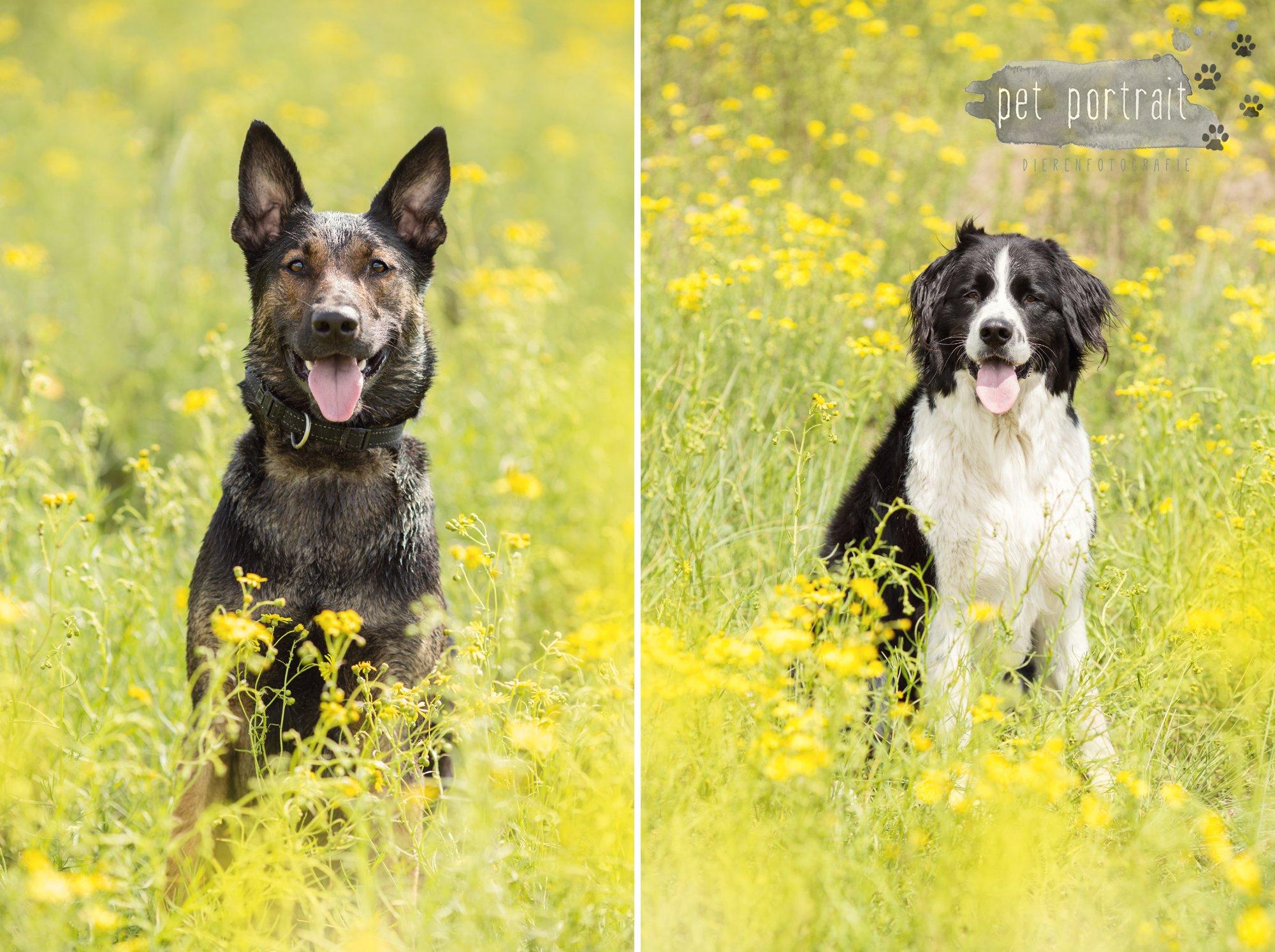 Doggy Treasure Hunt-4