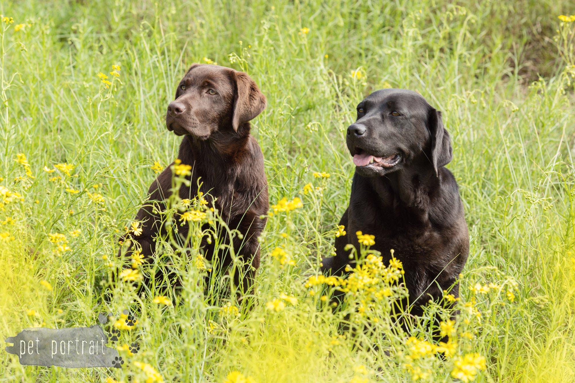 Doggy Treasure Hunt-5
