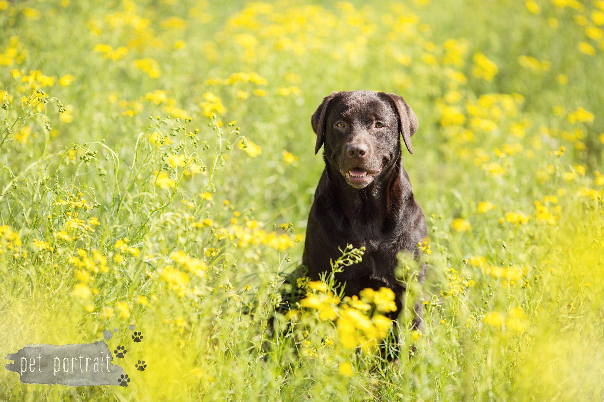 Doggy Treasure Hunt-8