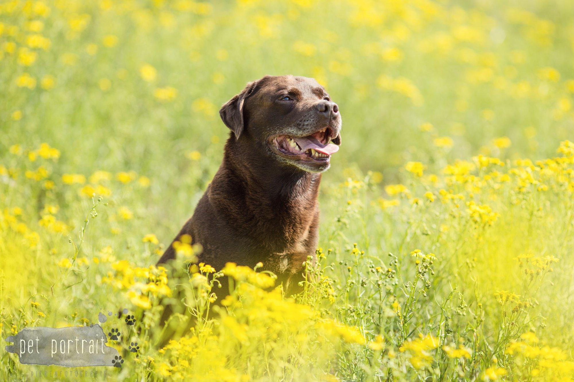 Doggy Treasure Hunt-9