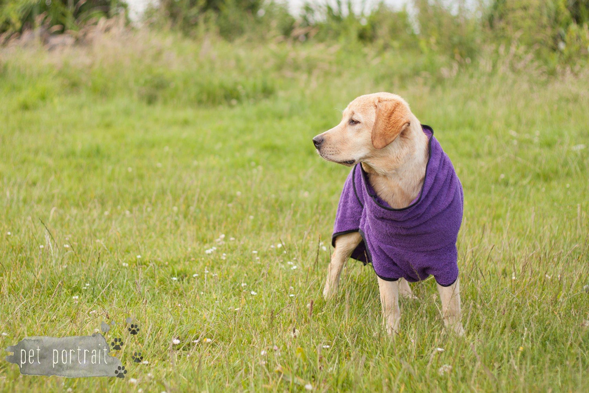 DogStore Handgemaakte hondenartikelen - badjassen-3