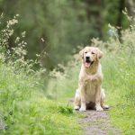 Dierenfotografie Tip - Stress herkennen