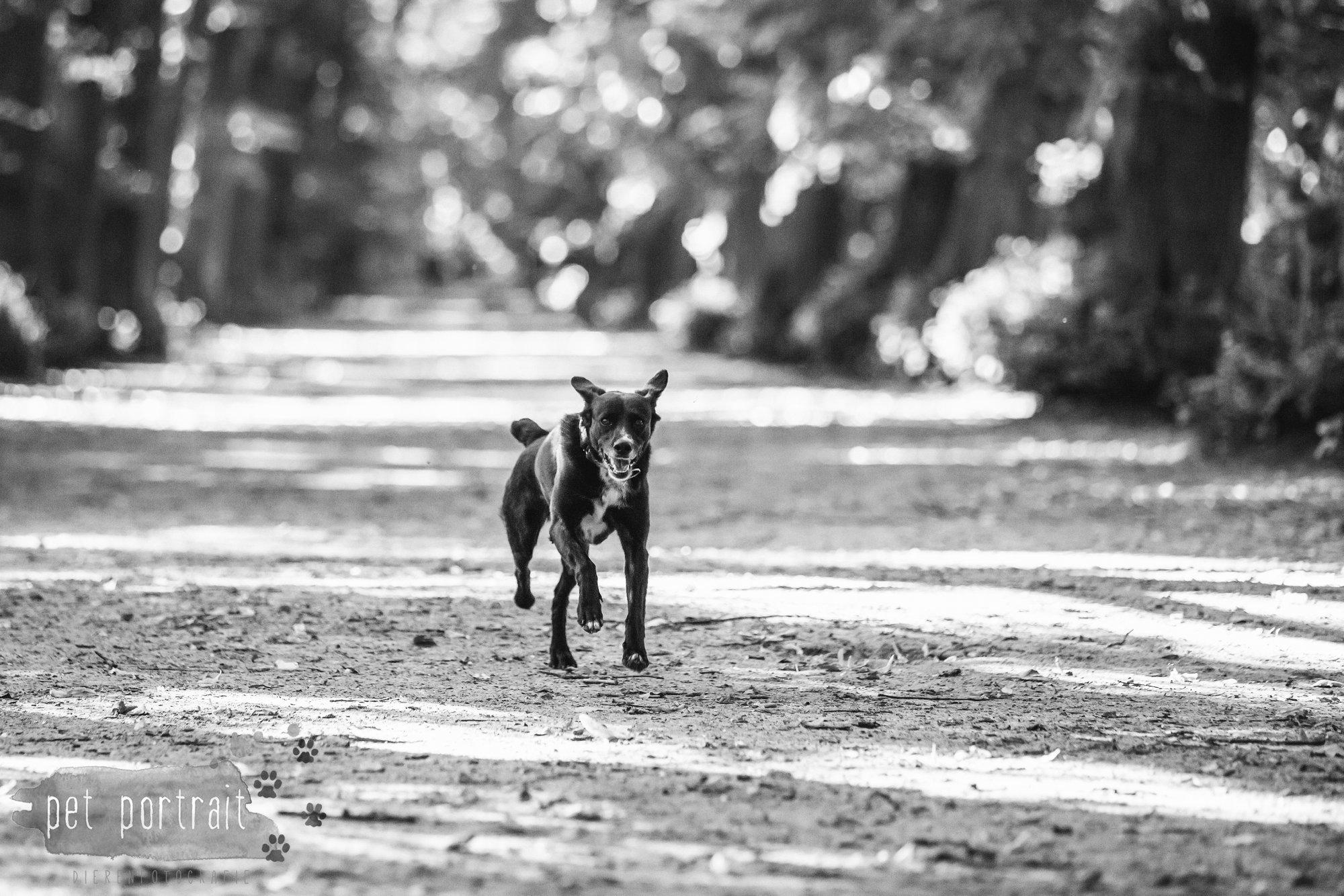 Hondenfotograaf Heemstede - Fotoshoot in het bos-1