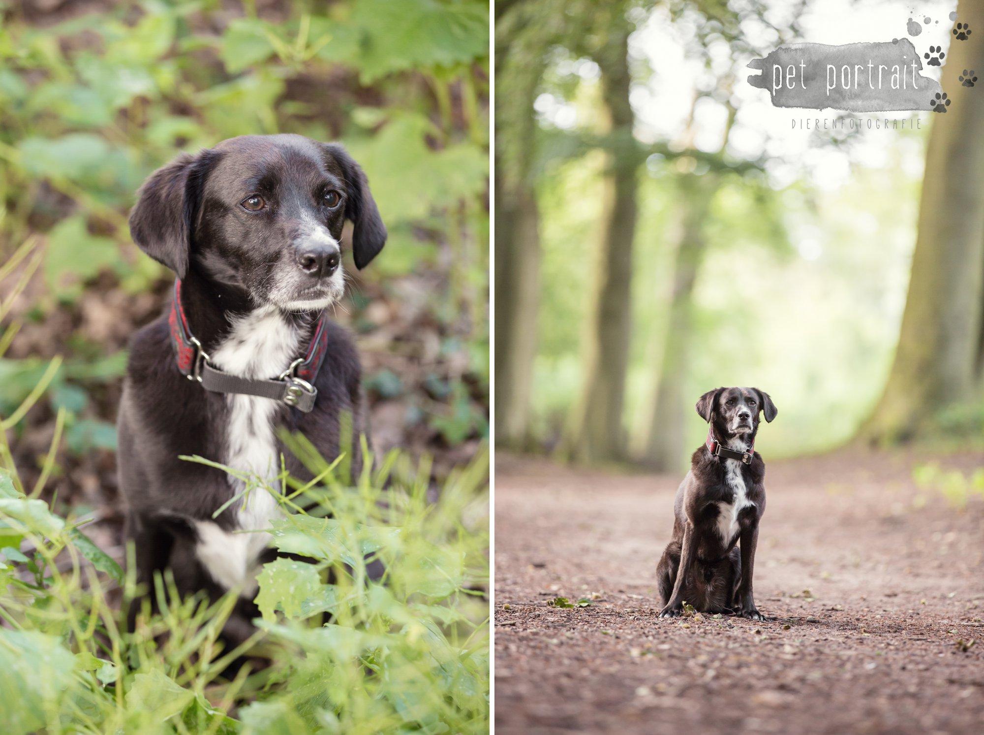 Hondenfotograaf Heemstede - Fotoshoot in het bos-10