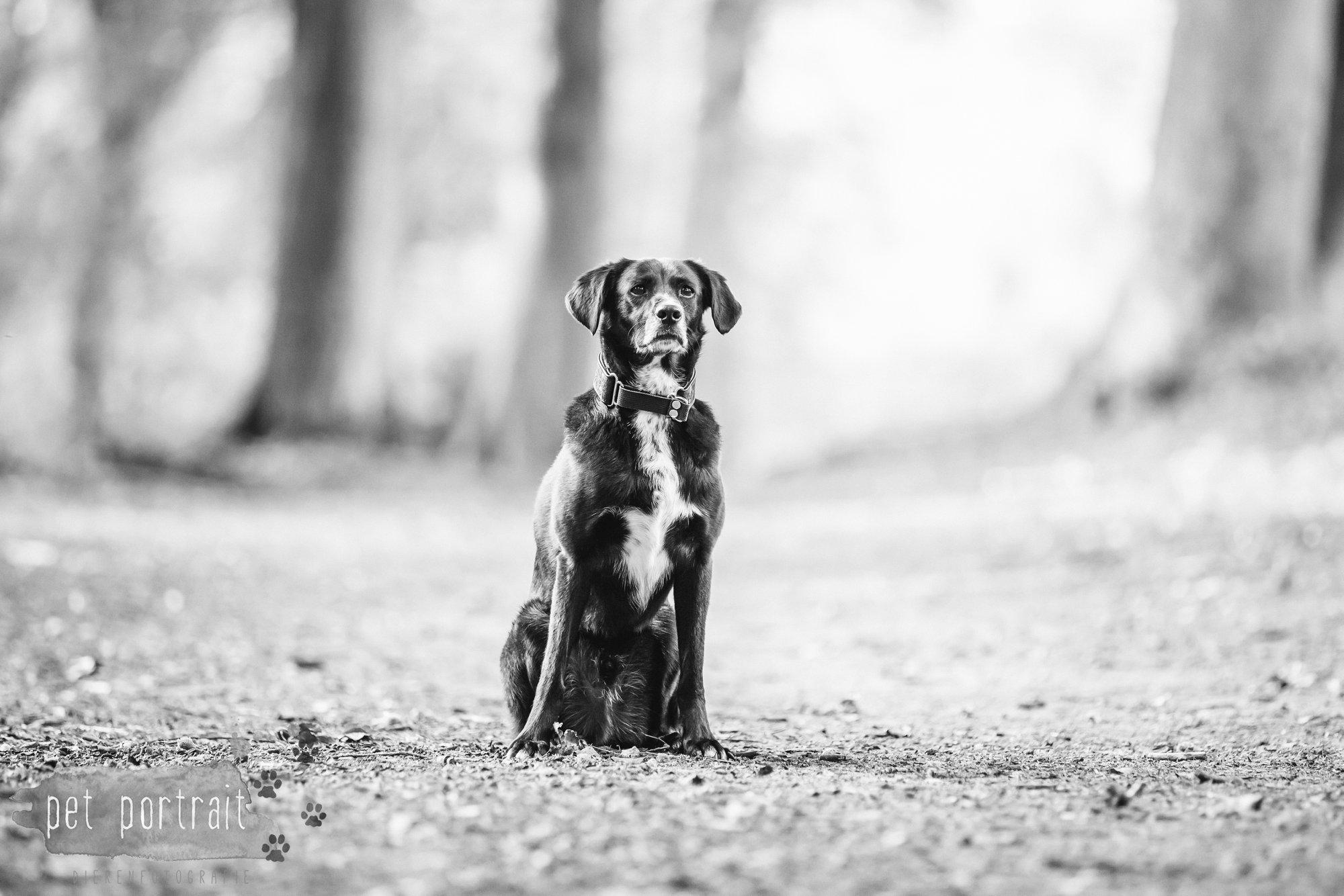 Hondenfotograaf Heemstede - Fotoshoot in het bos-11