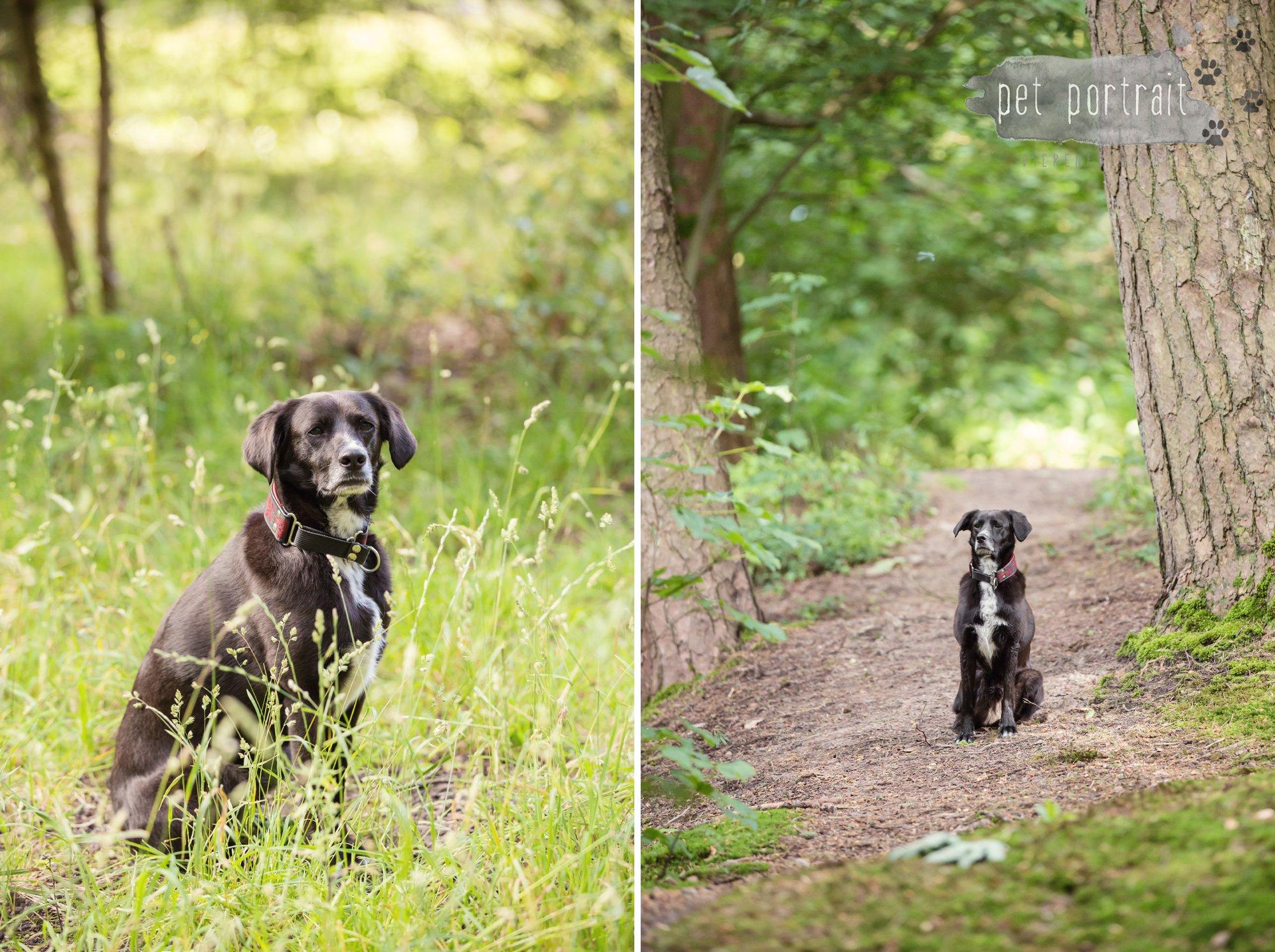 Hondenfotograaf Heemstede - Fotoshoot in het bos-13